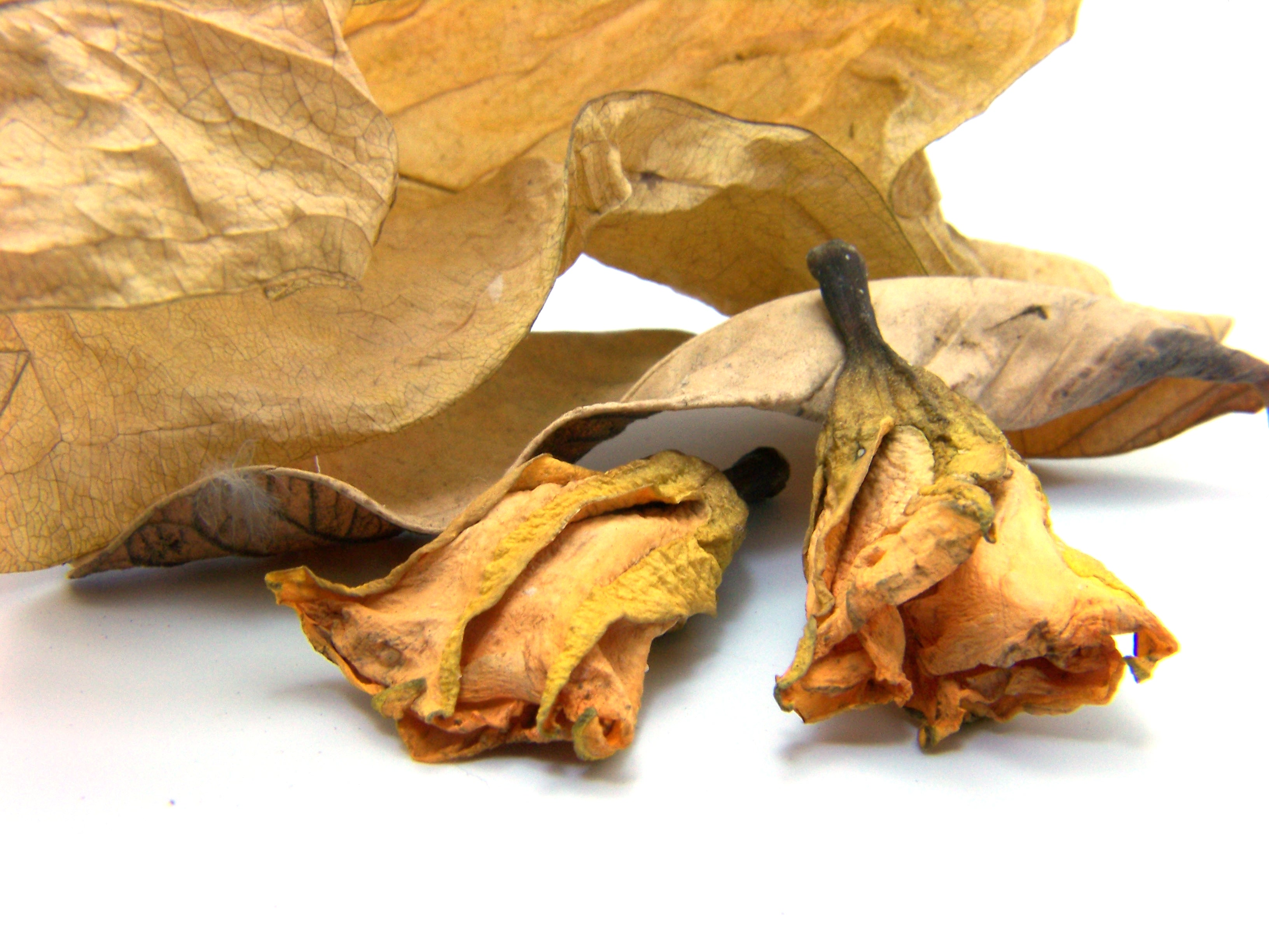 Dead leafs photo