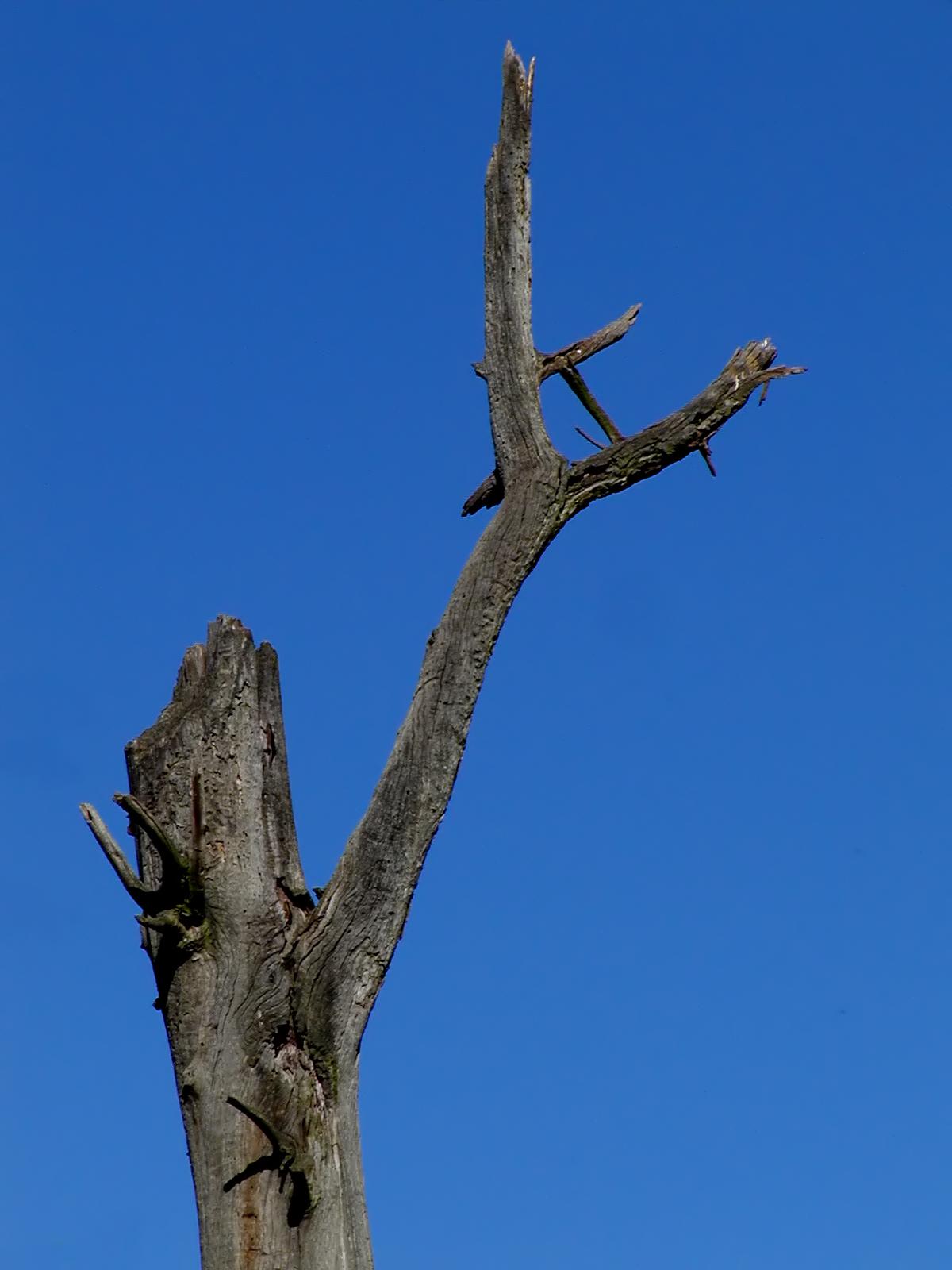 Dead tree photo