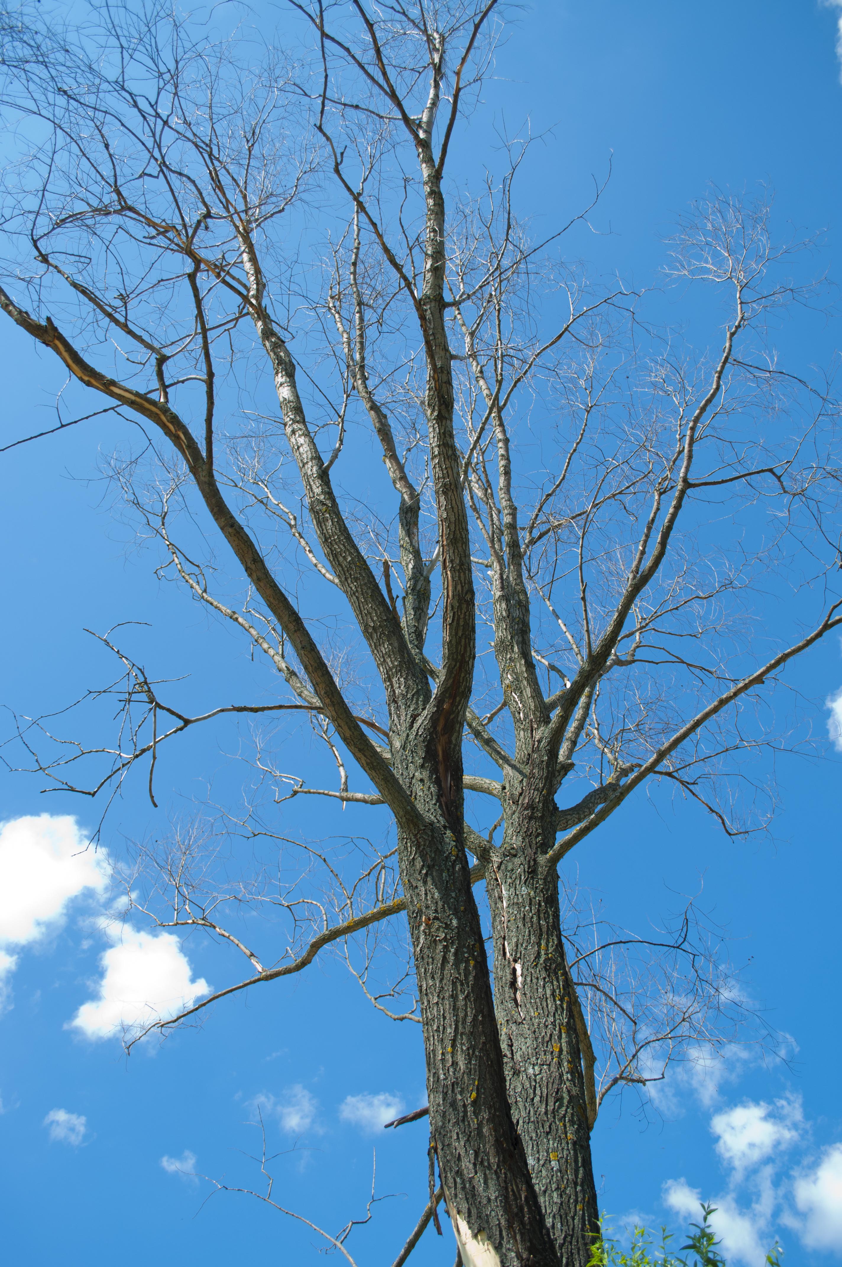 Dead tree, Bare, Branches, Dead, Tree, HQ Photo