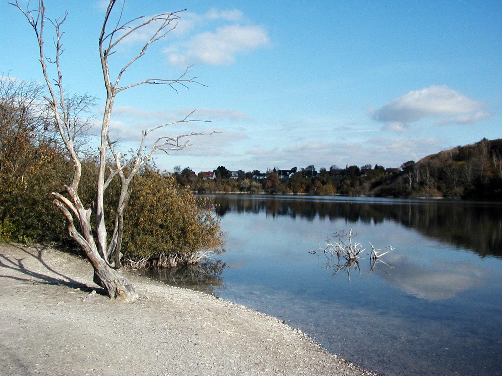 Dead tree by a lake, Beach, Dead, Houses, Lake, HQ Photo
