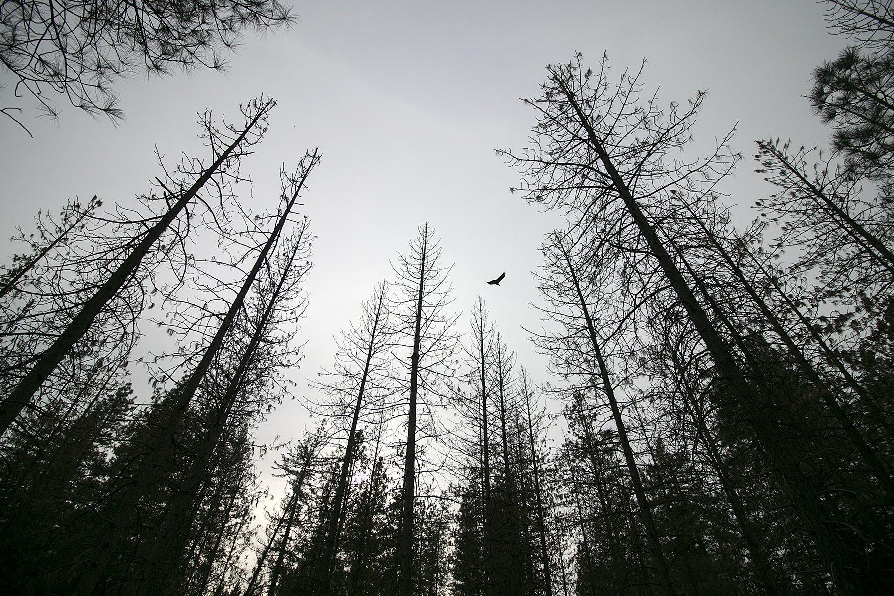 27 million more dead trees identified in California