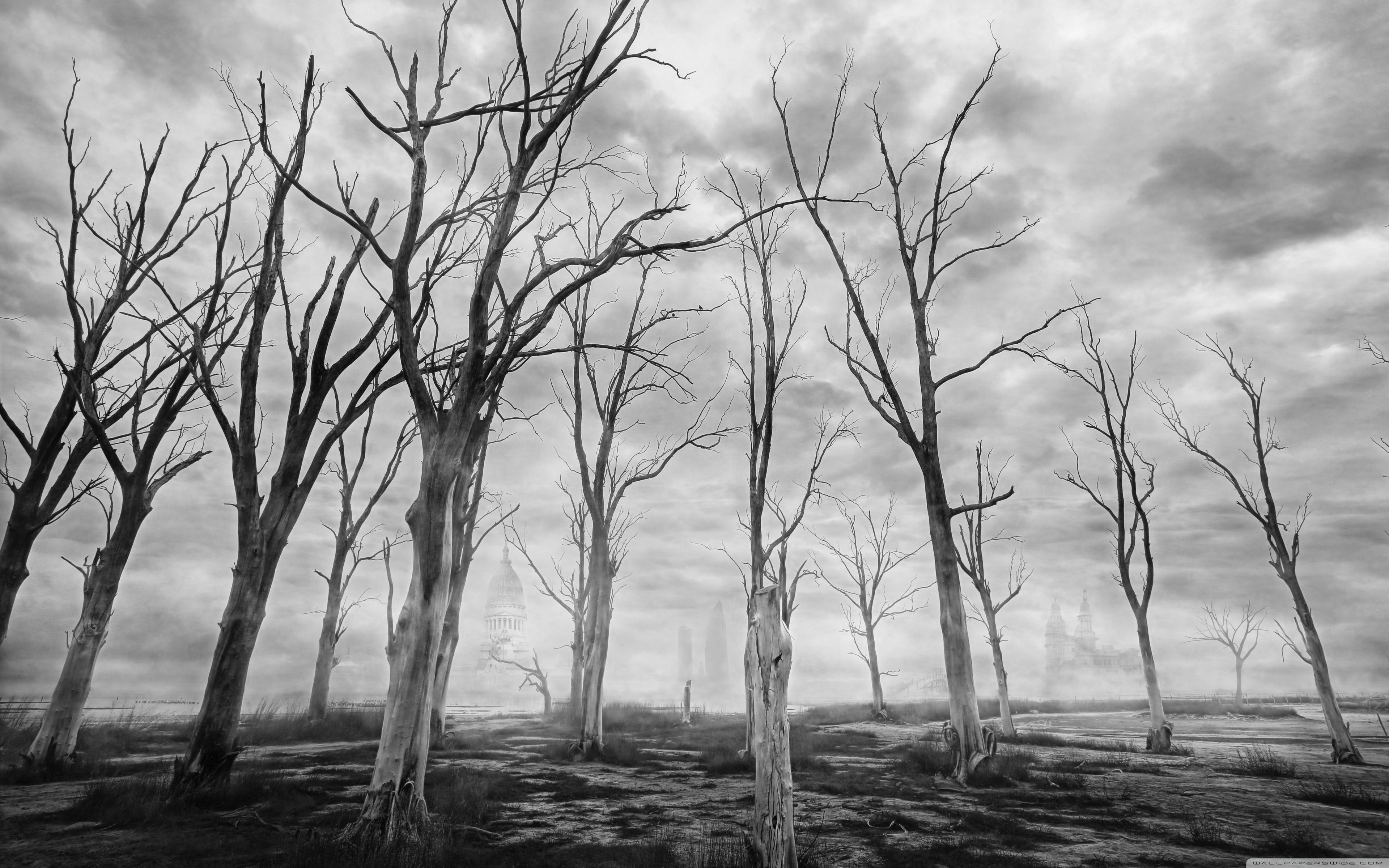 Dead Trees Black and White ❤ 4K HD Desktop Wallpaper for 4K Ultra ...