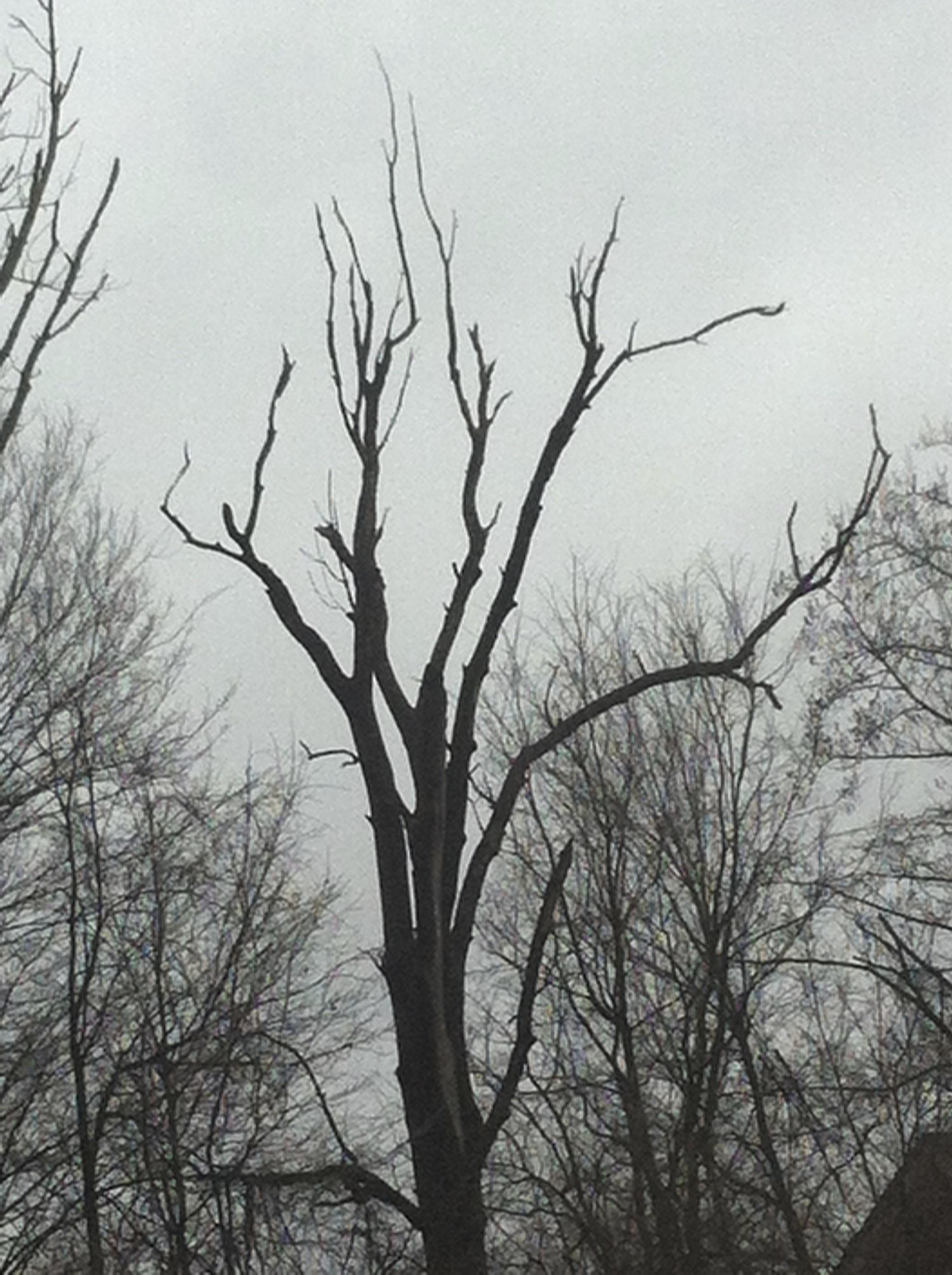 Dead Trees, by S. Sharonlu Sheridan OSF | Peace & Good