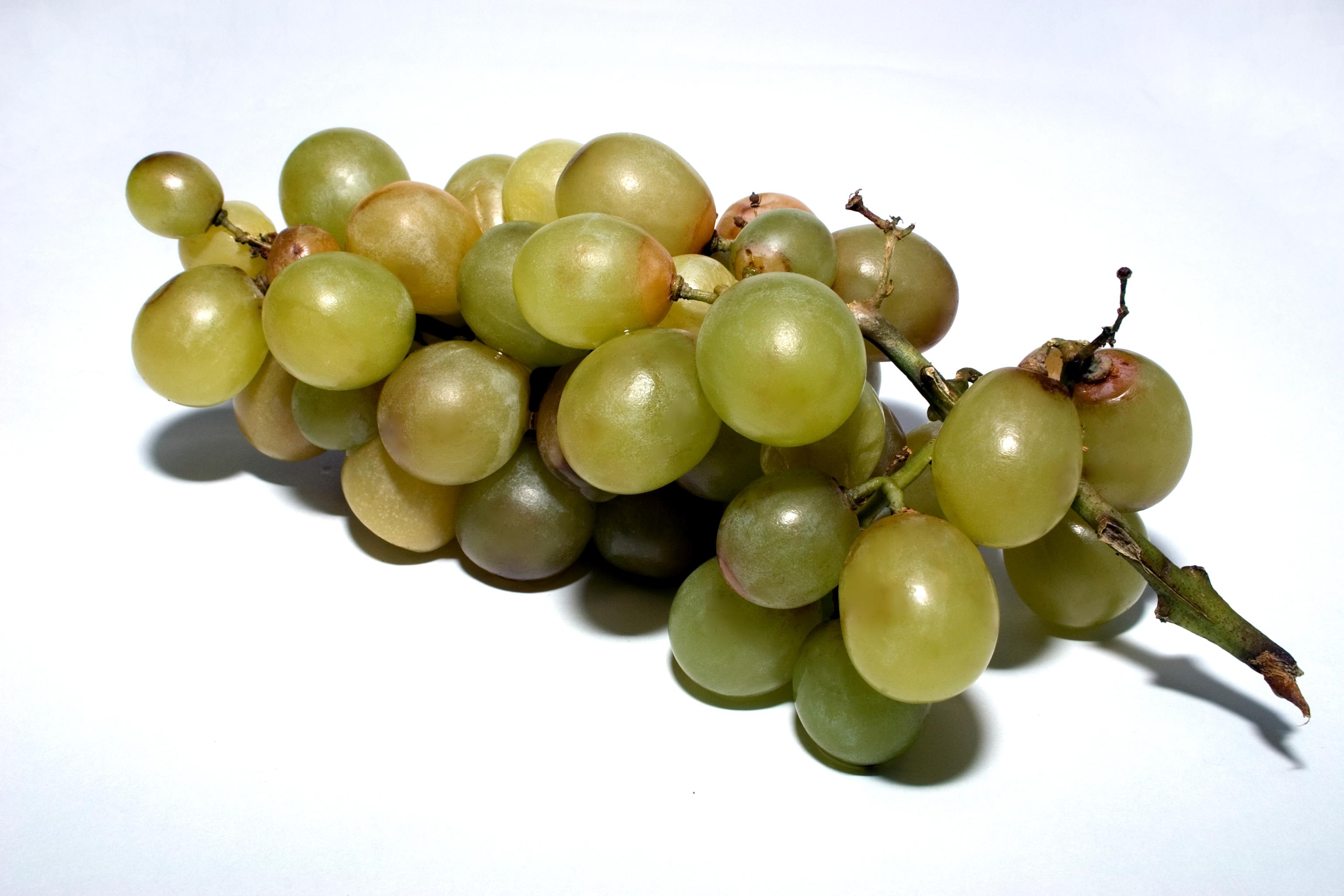 Rotten vine cluster photo