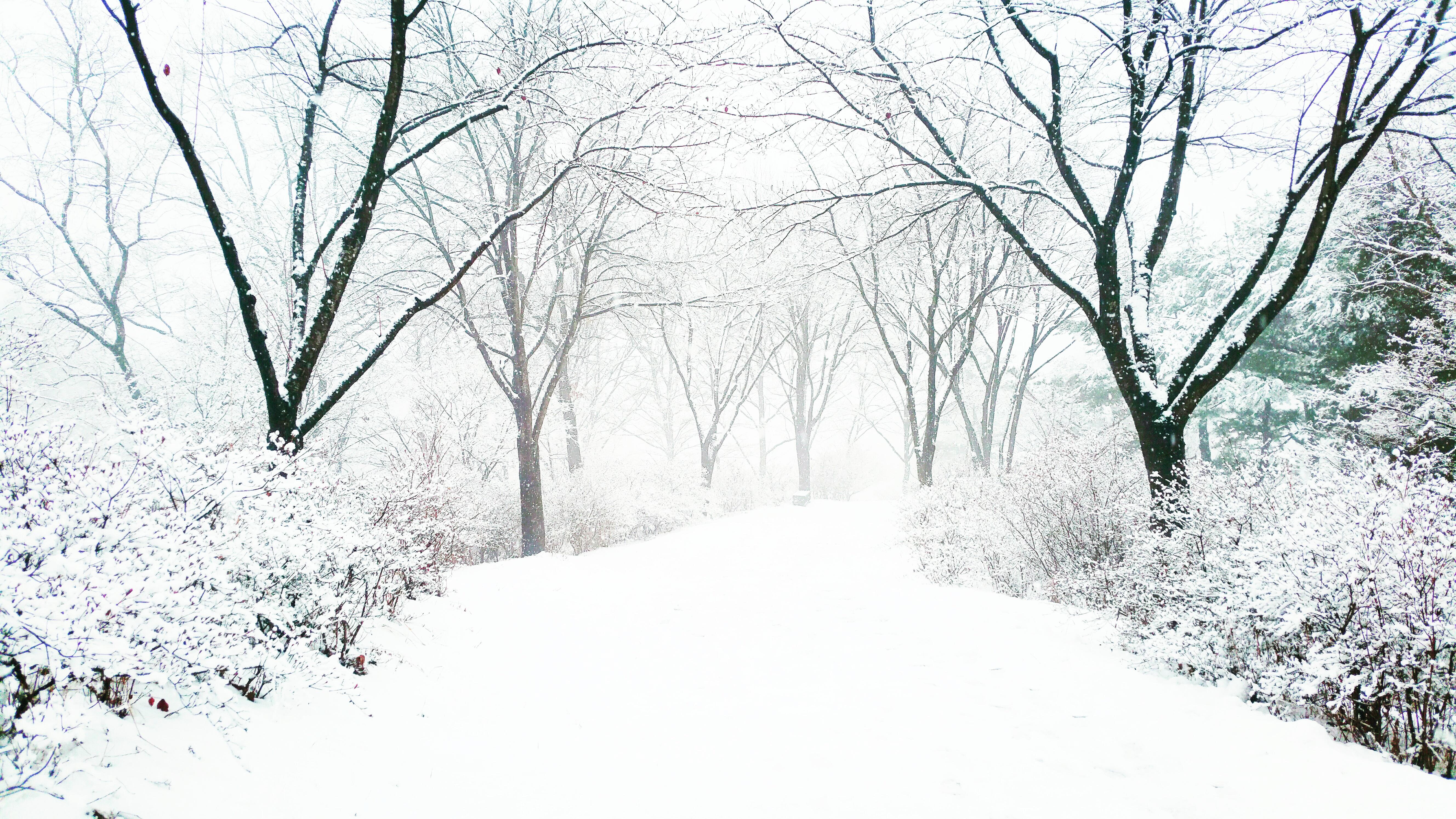 December 24, 2017, 雲, 雪岳, 韓国, 風景, HQ Photo