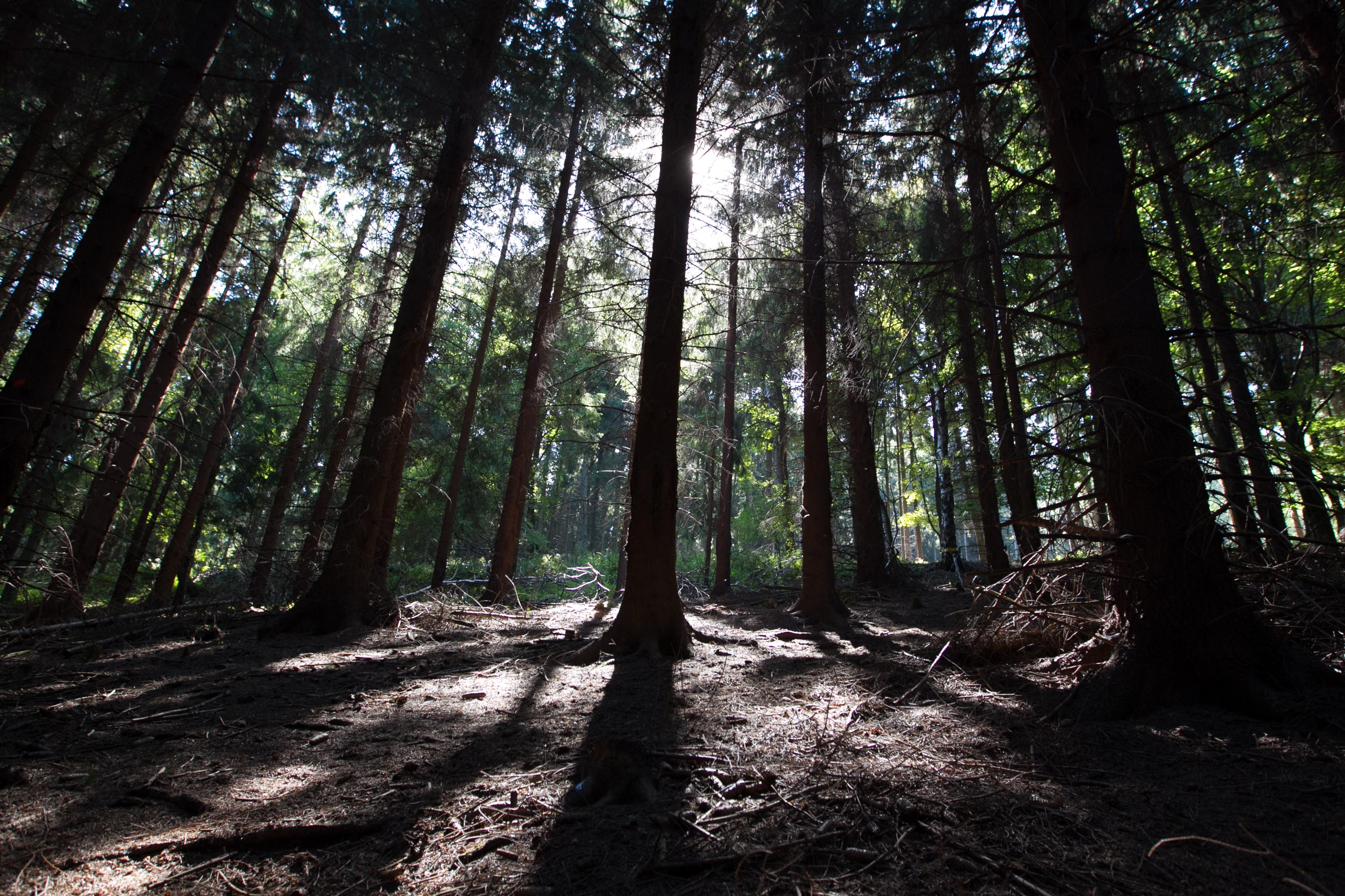 Deep forest : Photos, Diagrams & Topos : MBPost