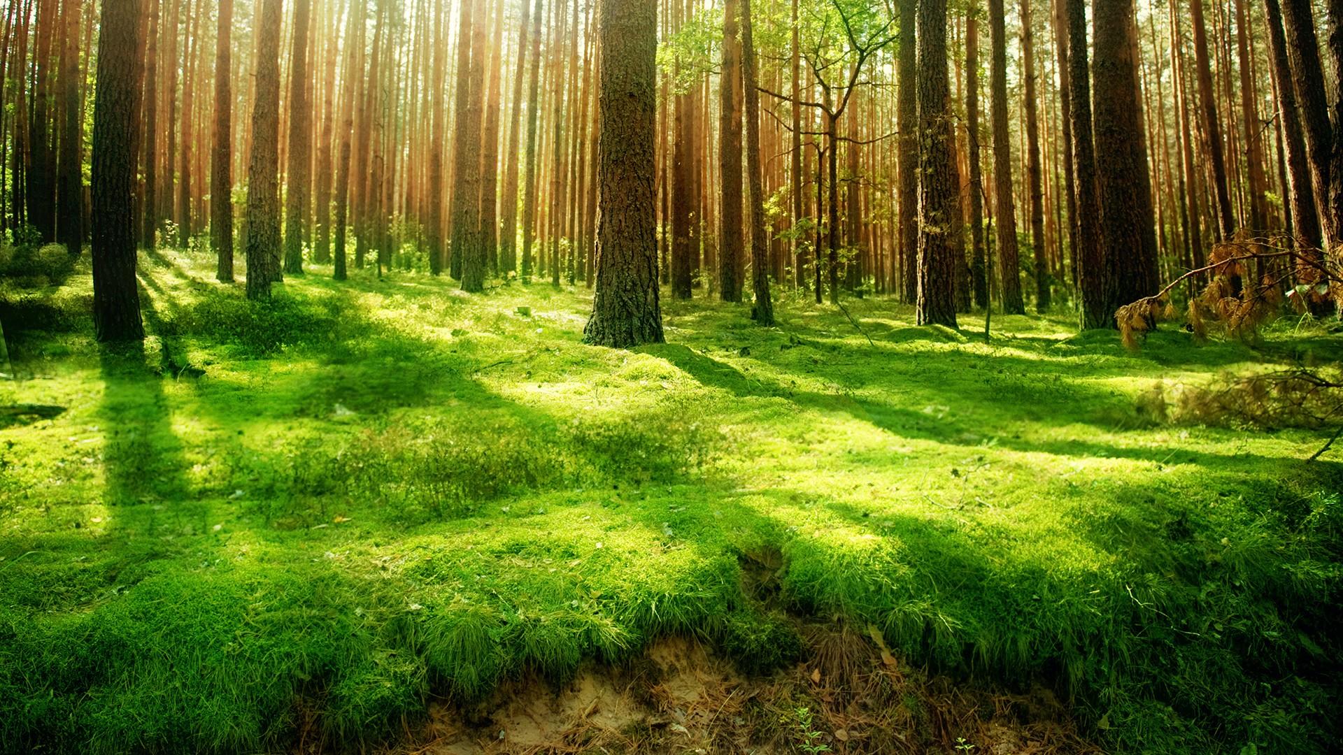 Sunlight In The Deep Forest Wallpaper | Wallpaper Studio 10 | Tens ...