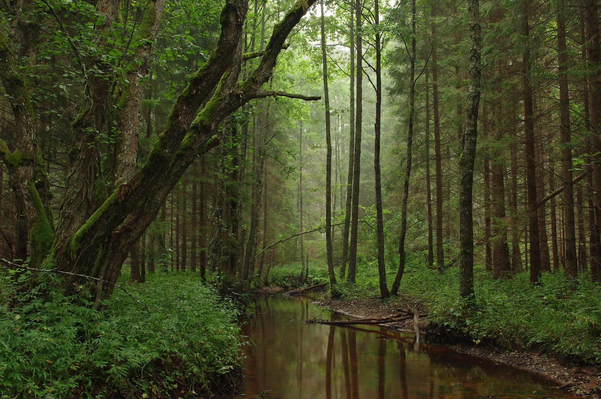 Deep Forest - OGQ Backgrounds HD