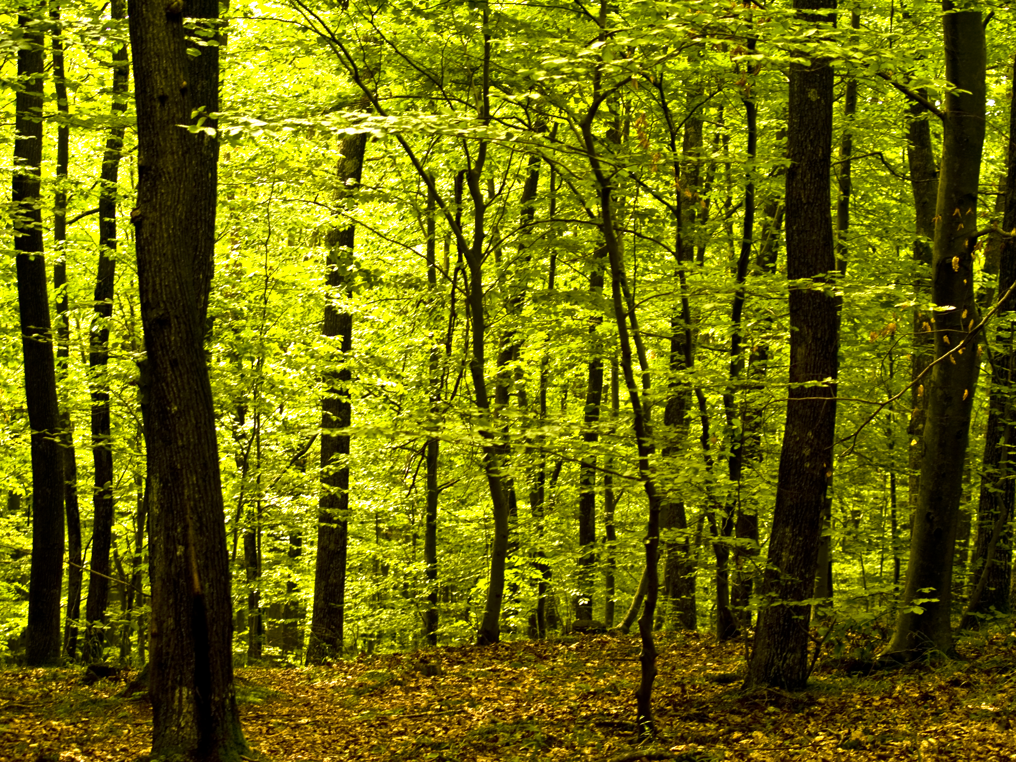 Deep forest, Forest, Green, Leafs, Plants, HQ Photo