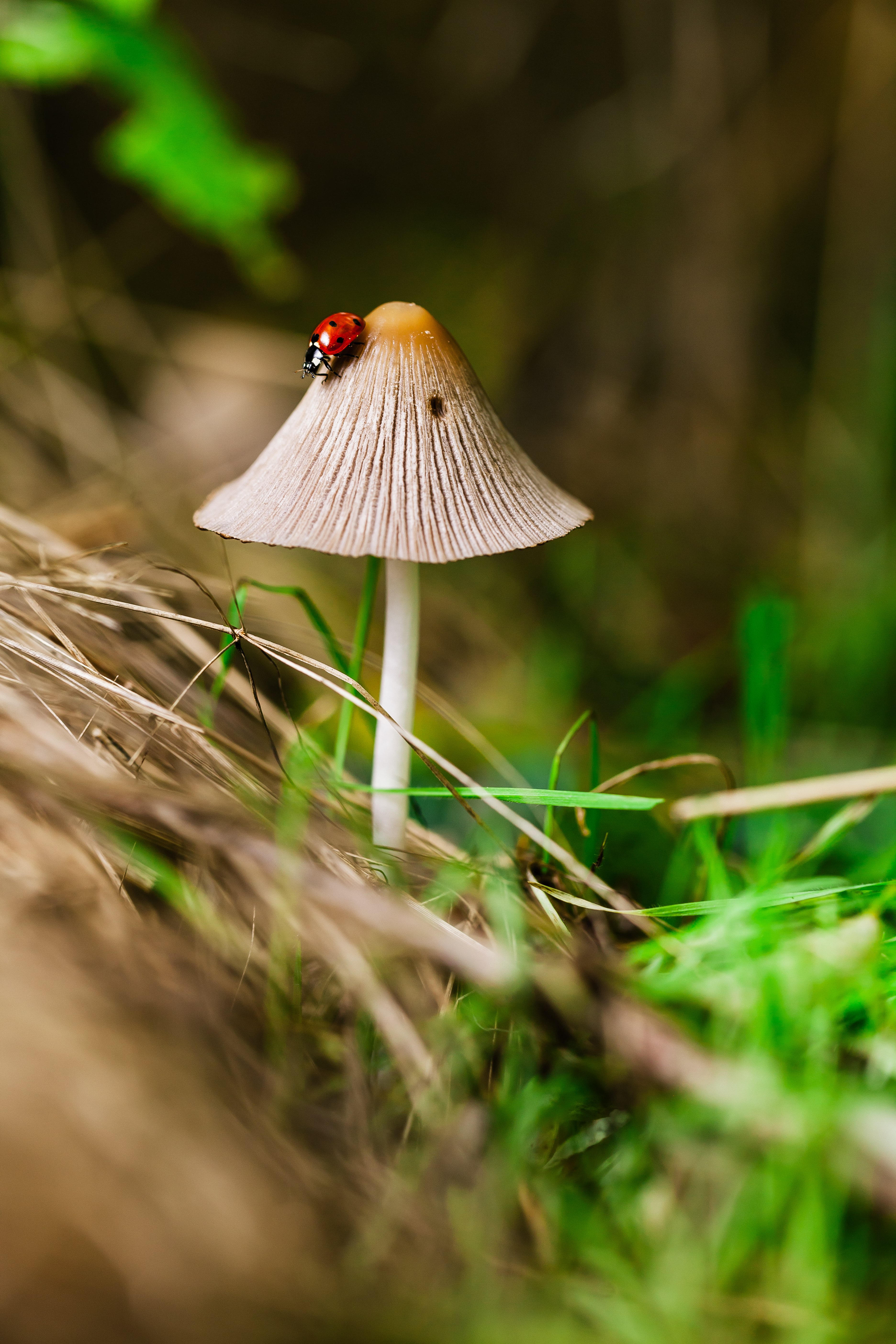 Deep in the woods, you find beauty, 5DII, 5DmarkII, Animal, Bokeh, HQ Photo