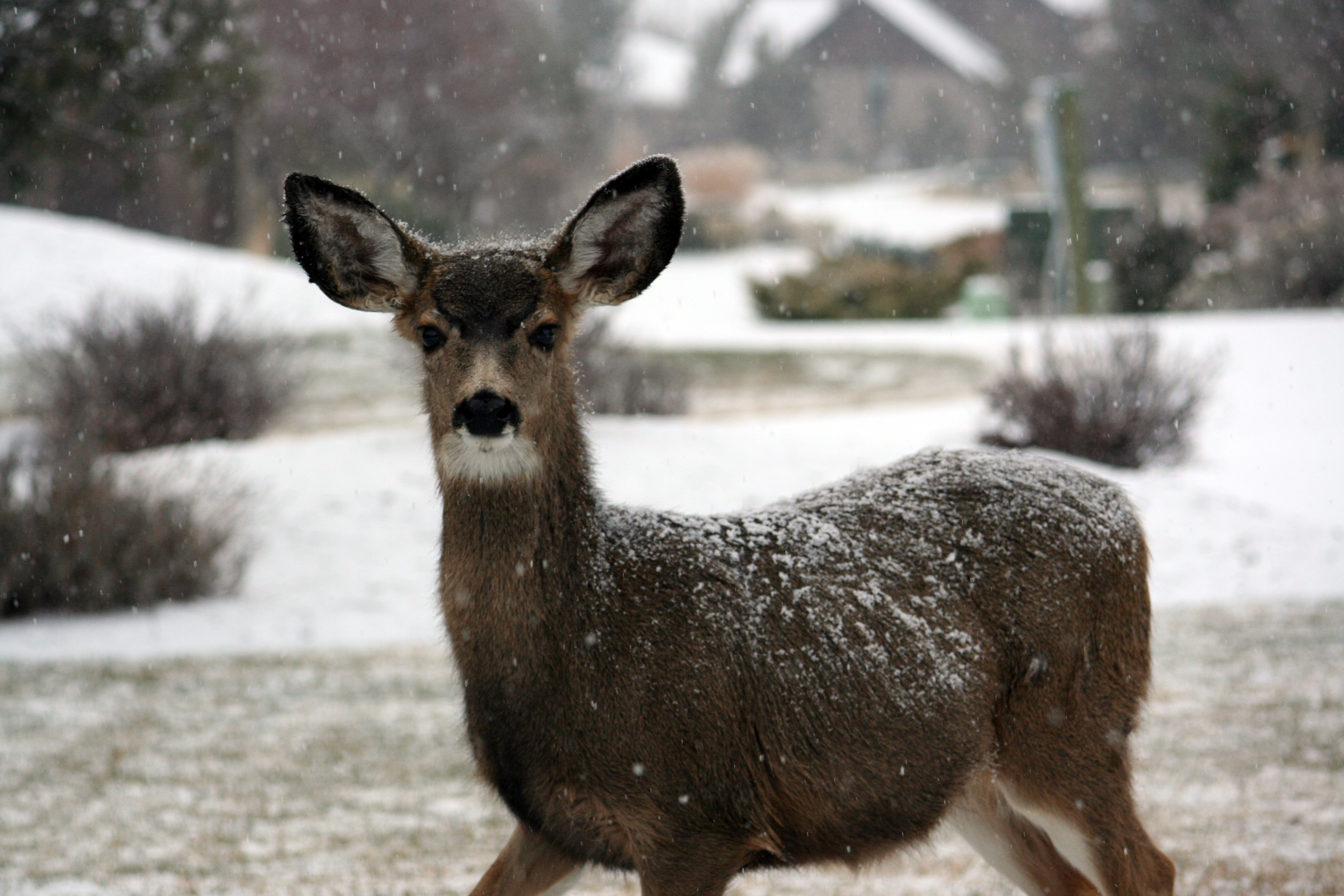 Deer, Animal, Fast, Ice, Landscape, HQ Photo