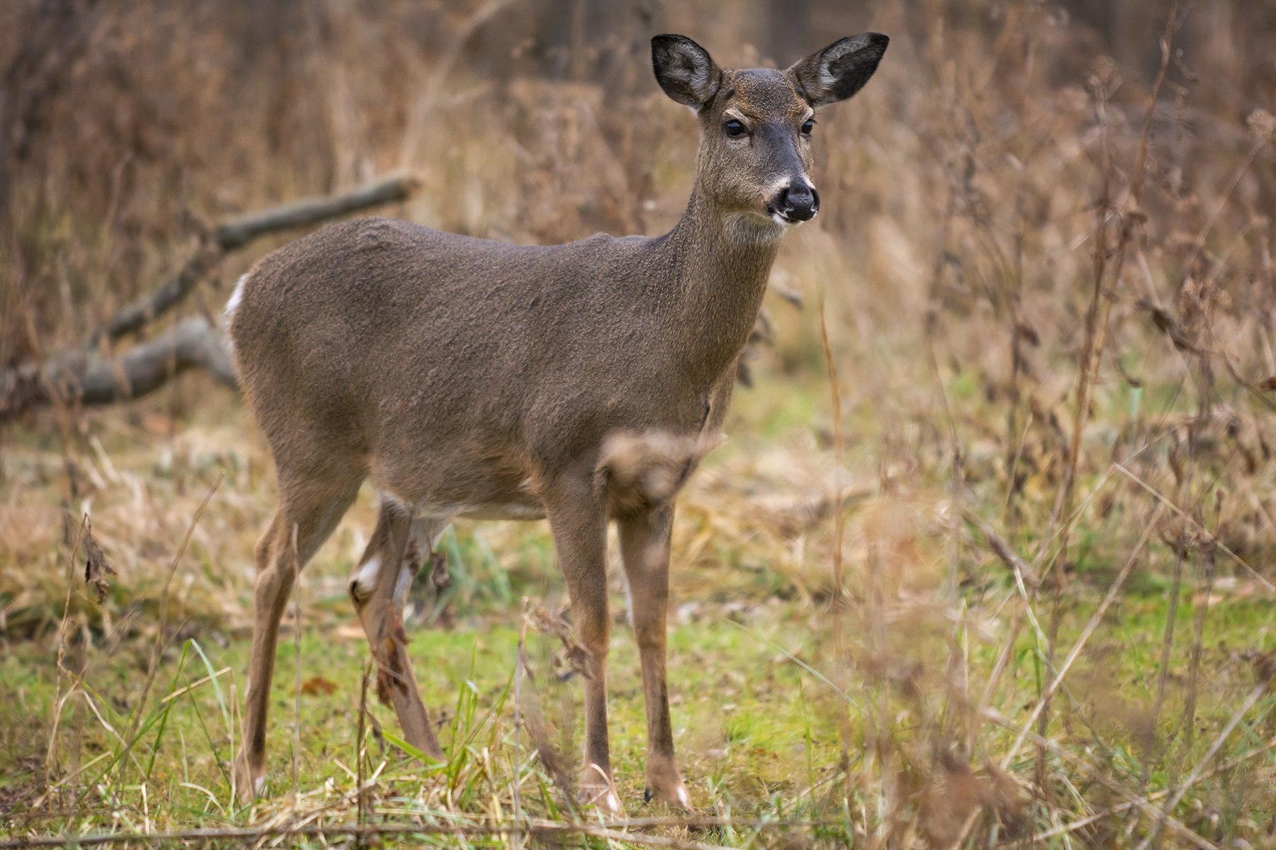 Experts: Reasons why Upstate NY deer hunting is off to a slow start ...