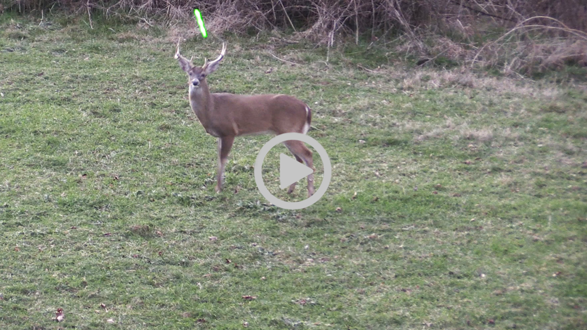 Midwest Whitetail | Deer Hunting Videos