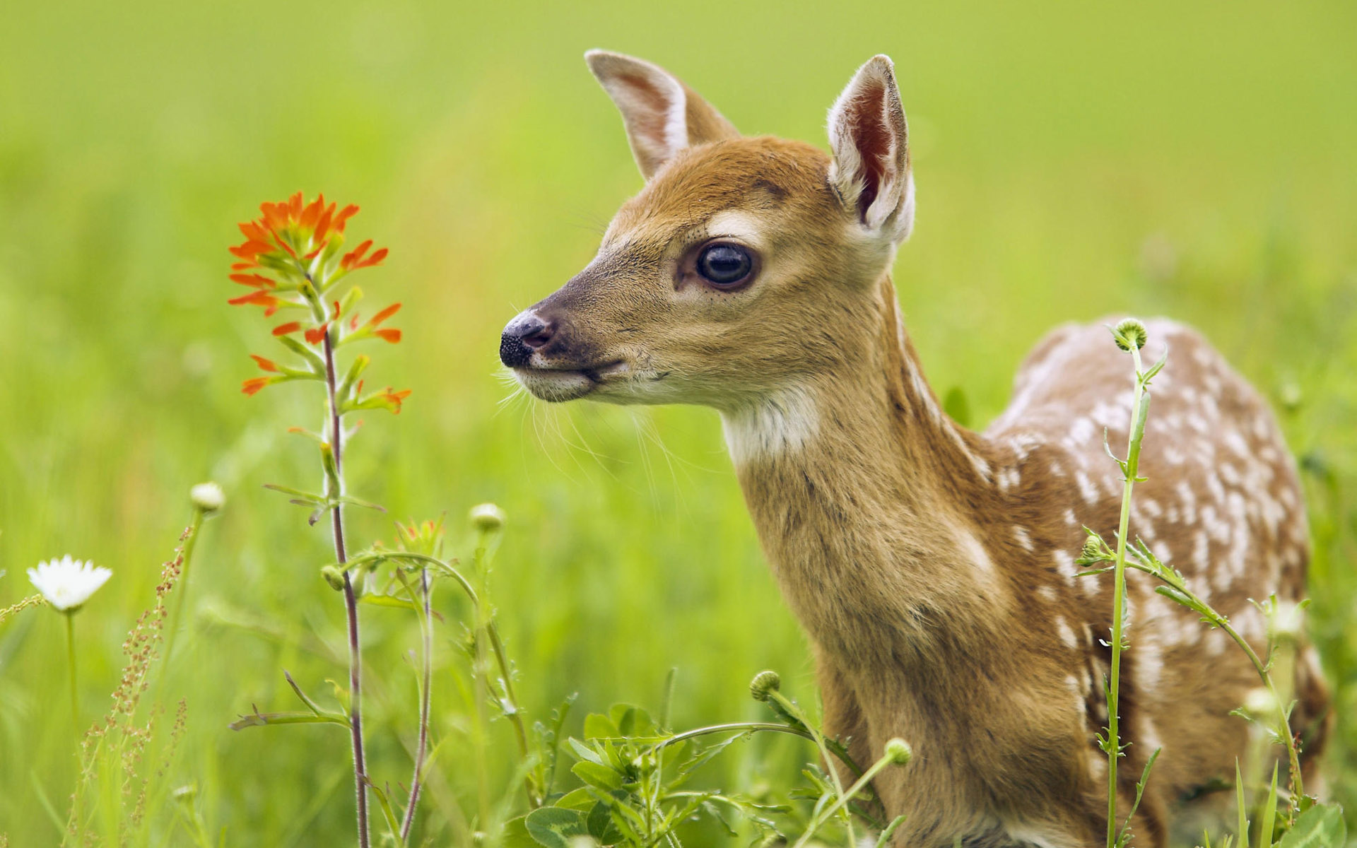 Humane Deer and Feral Cat Solutions – city of elyria ohio