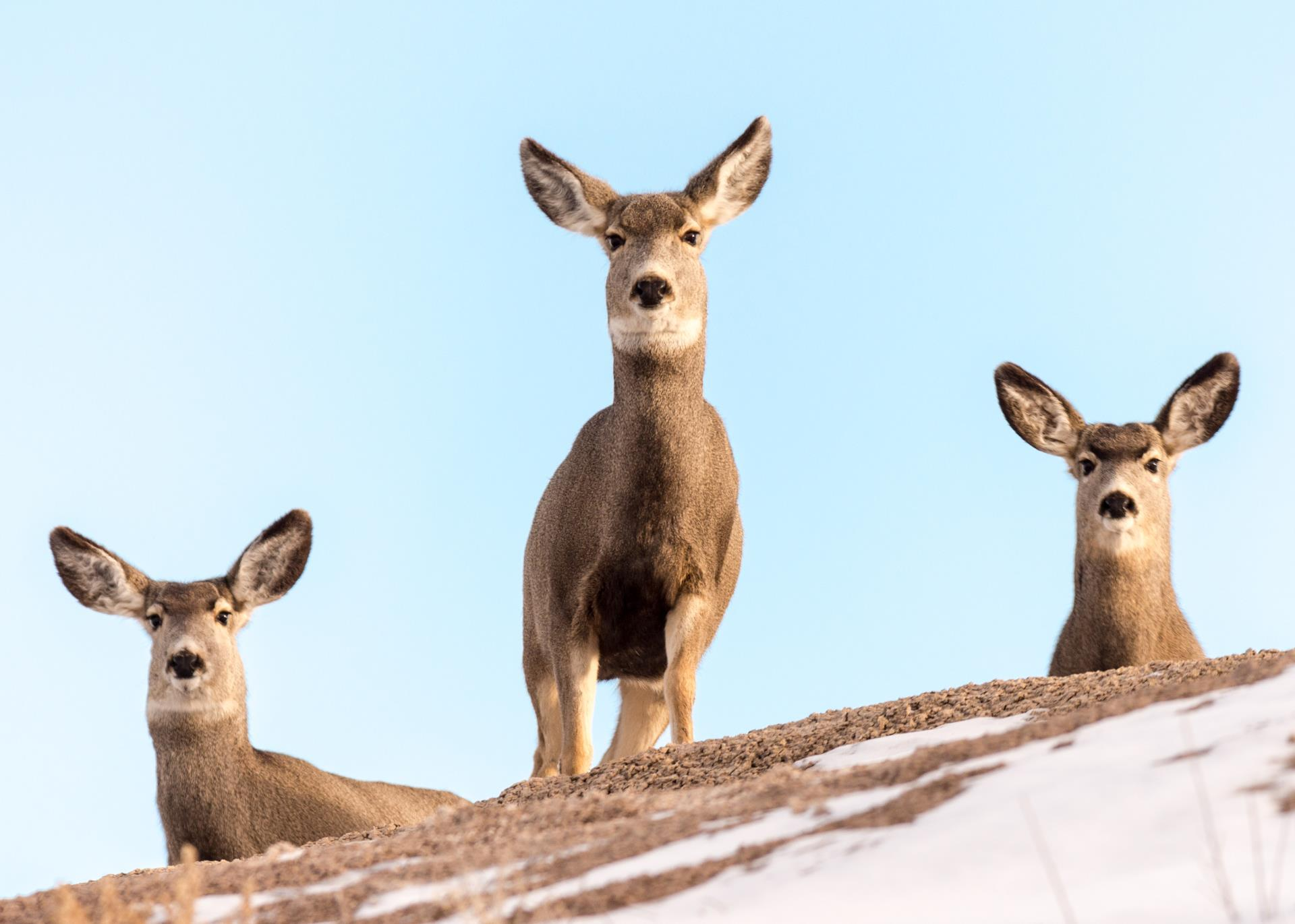 Residential Deer | Carson City