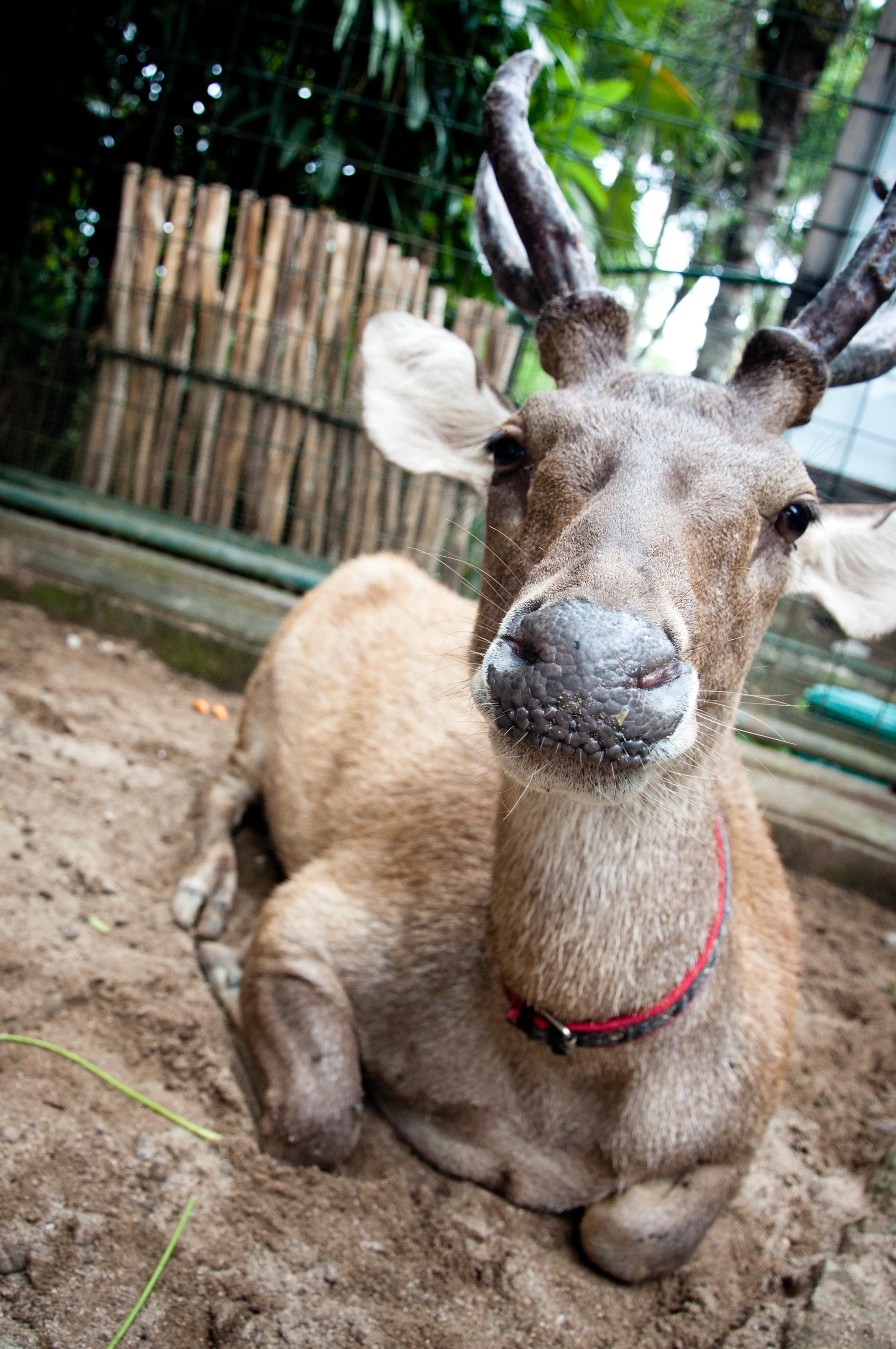 Deer, Animal, Wildlife, Wilderness, Wild, HQ Photo