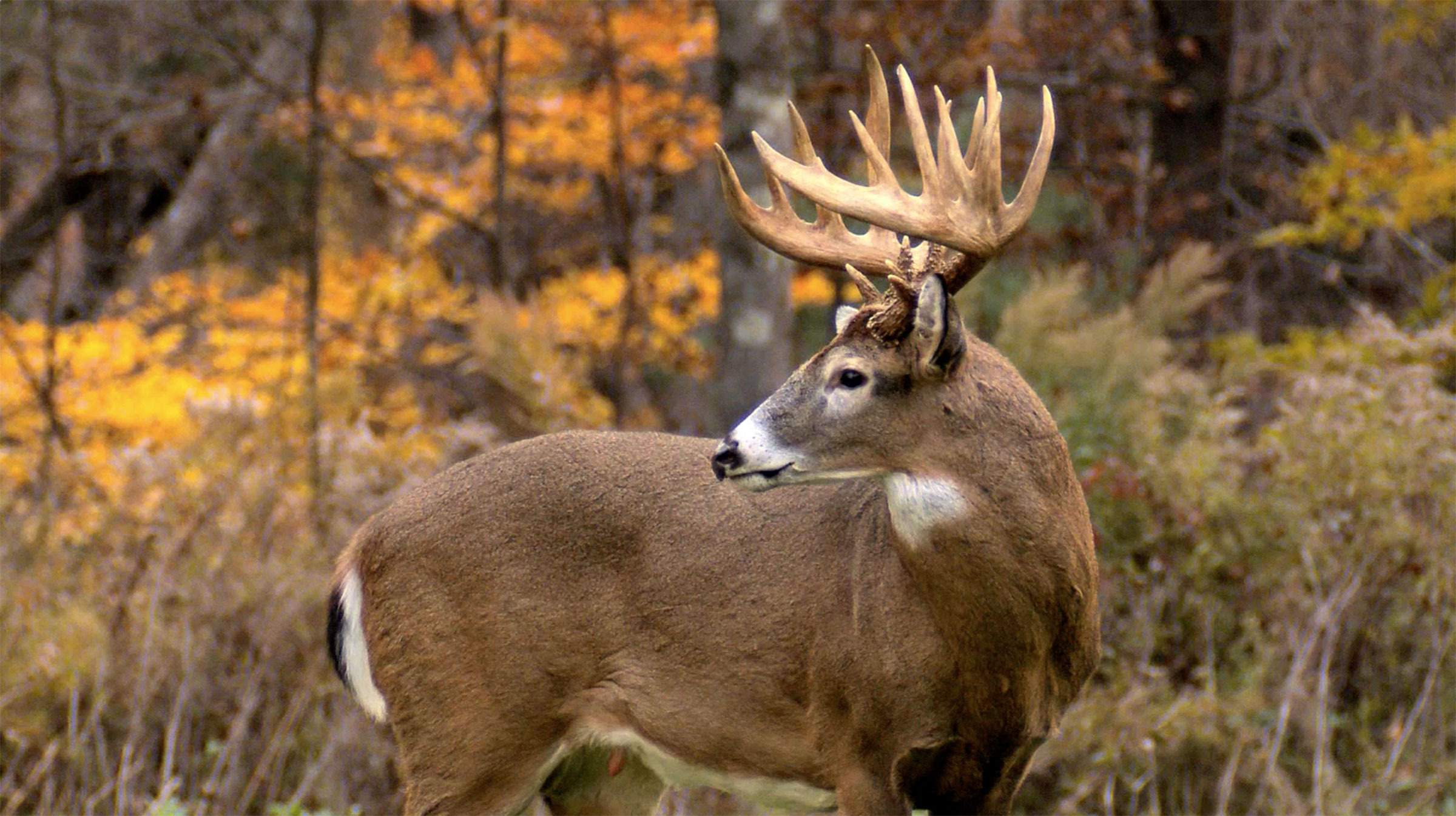 Not making the grade: Illinois gets 'B' as deer hunting state ...