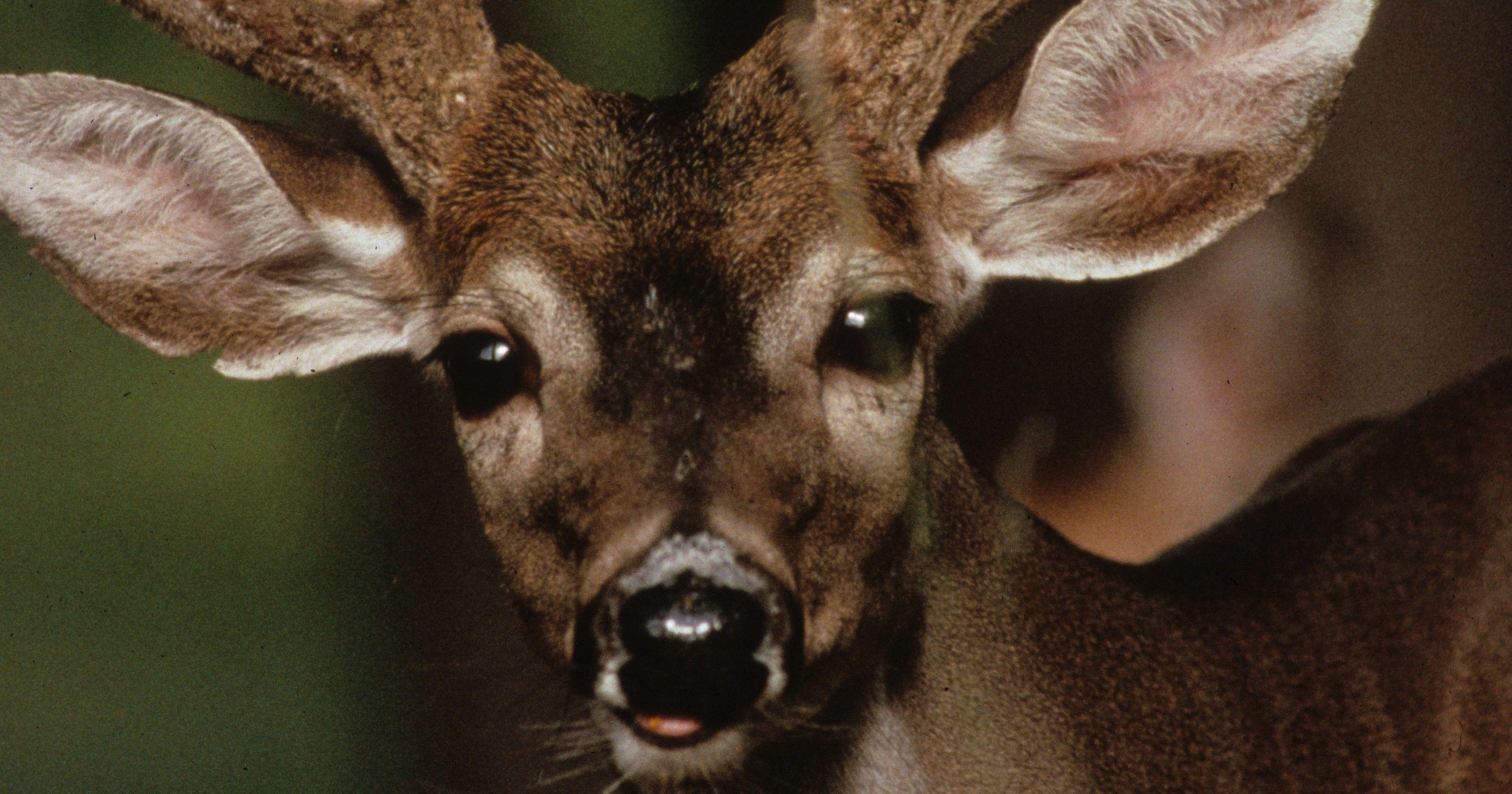 Rabid deer confirmed in Cherokee County