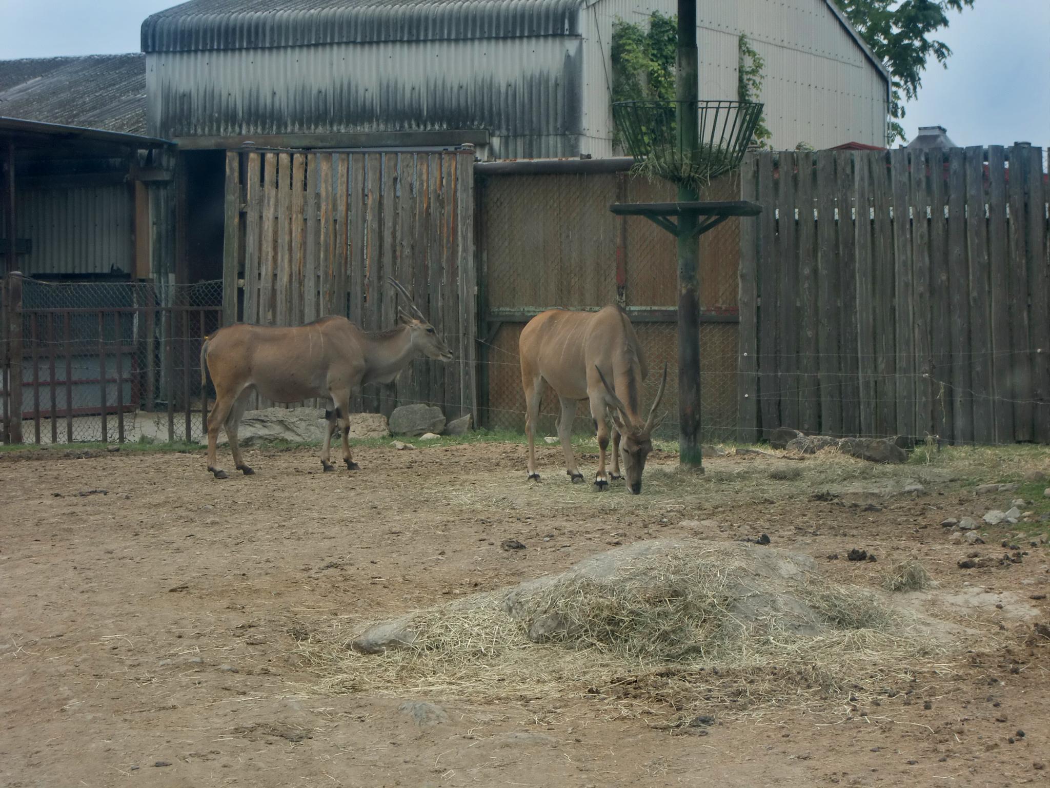 Deer, Animal, Zoo, HQ Photo