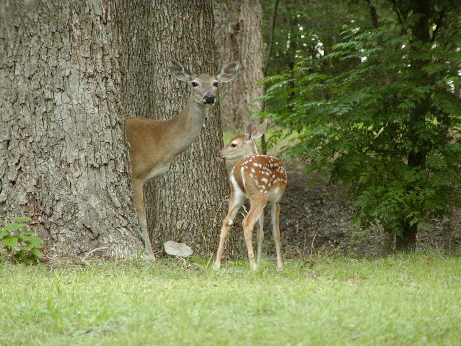 I Found a Baby Deer/Bird/etc., What Should I Do? | Wild Wonderings
