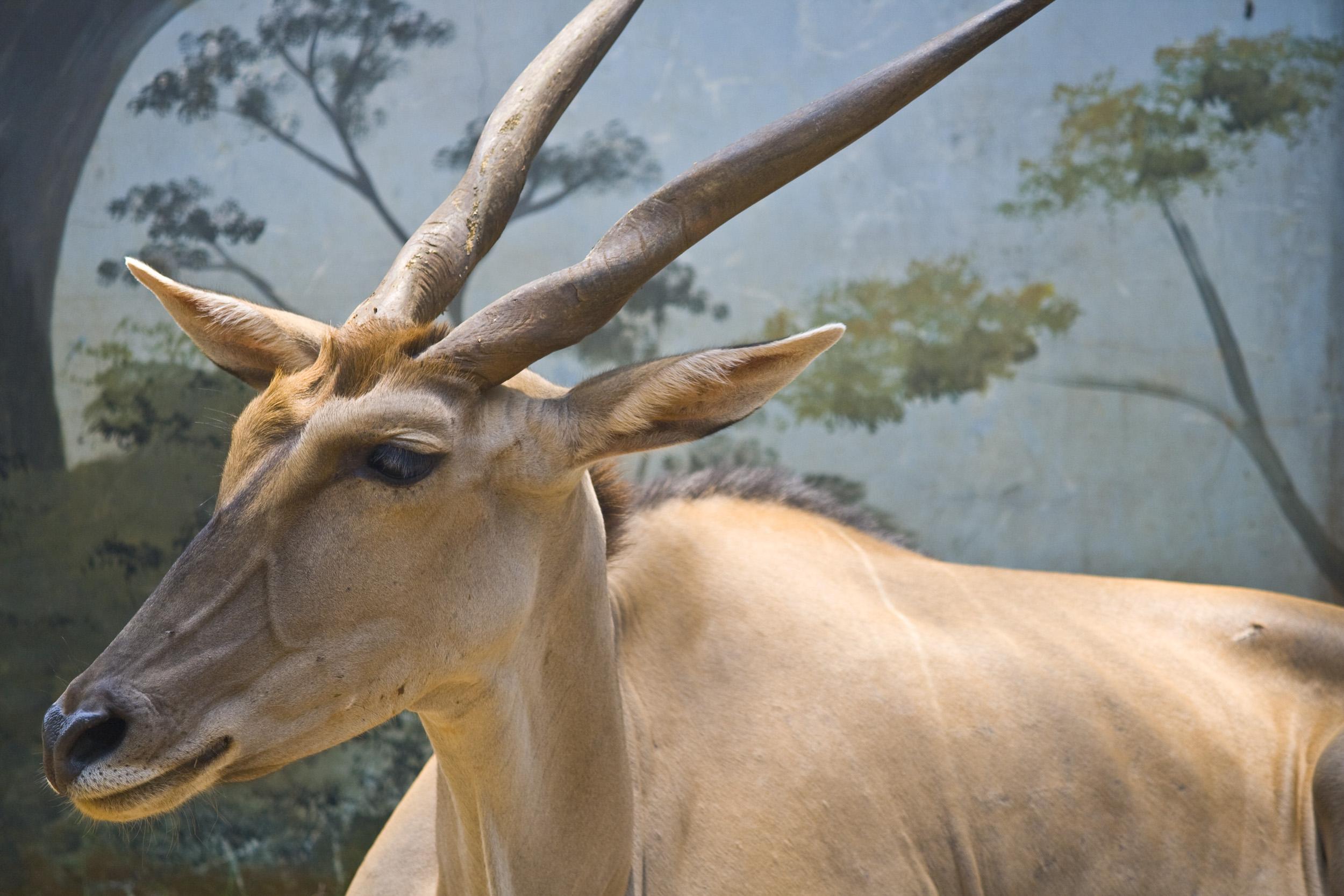 Deer Buck, Animal, Wilderness, Wild, Whitetail, HQ Photo