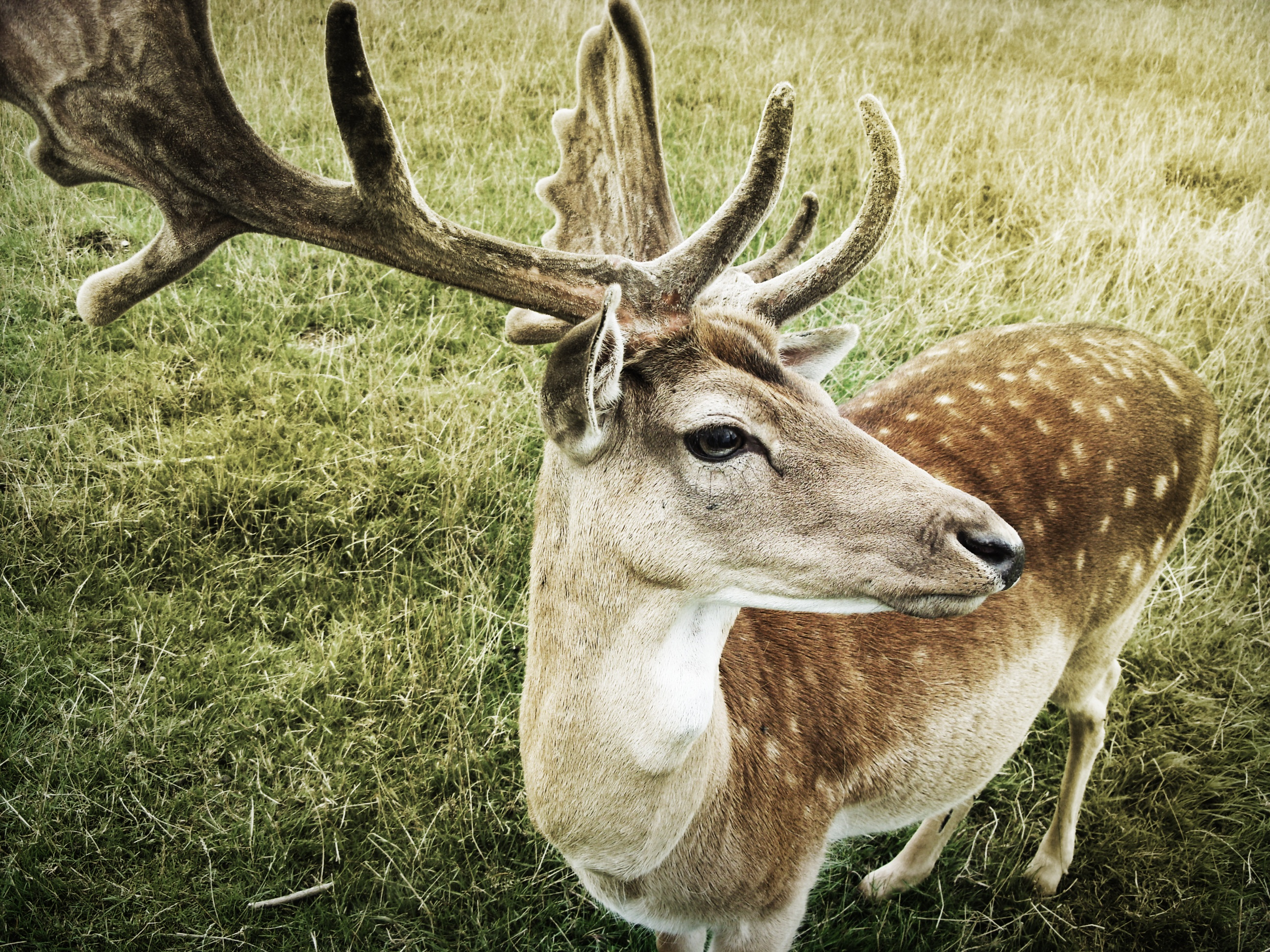 Deer Close Up, Fast, Nature, Speed, Deer, HQ Photo