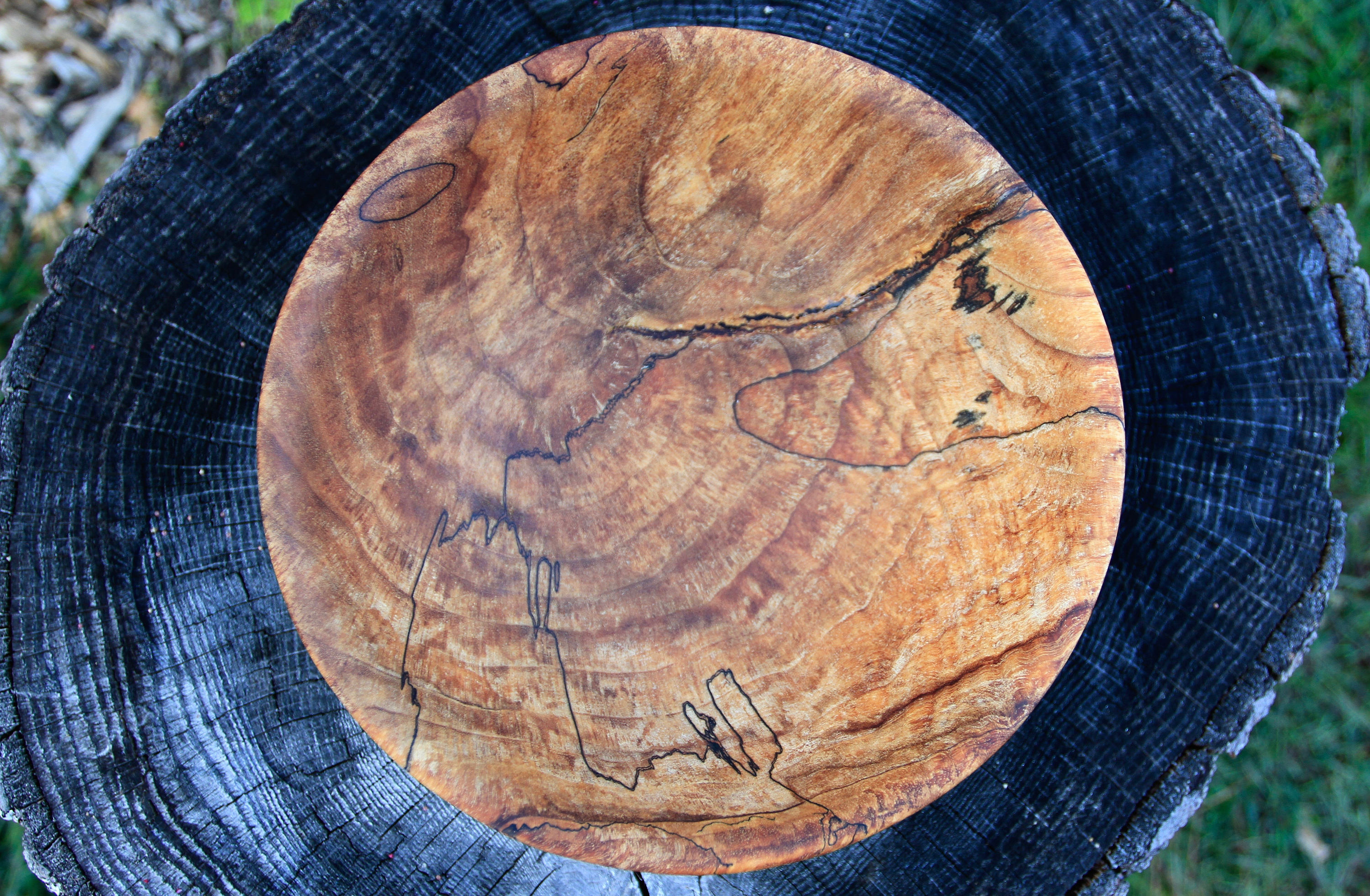 Spalted Maple Decorative Burl Bowl