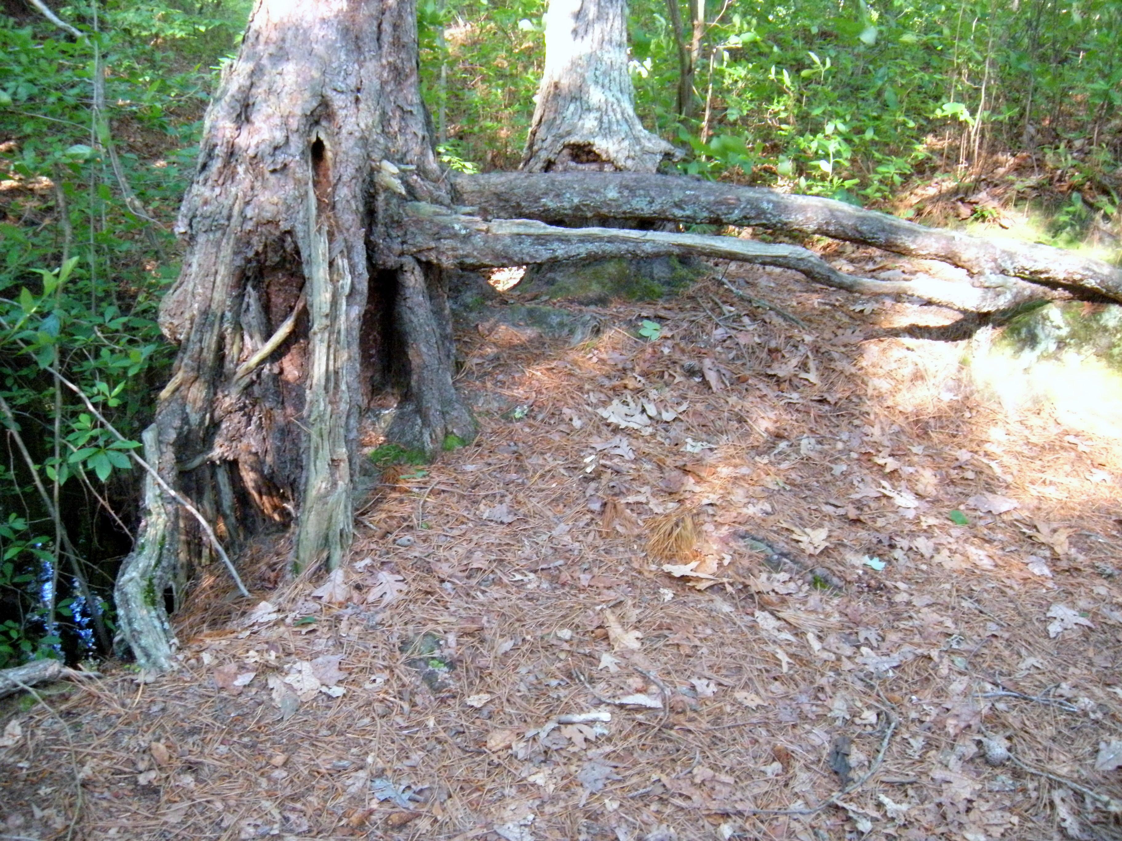 Deformed Tree Stumps