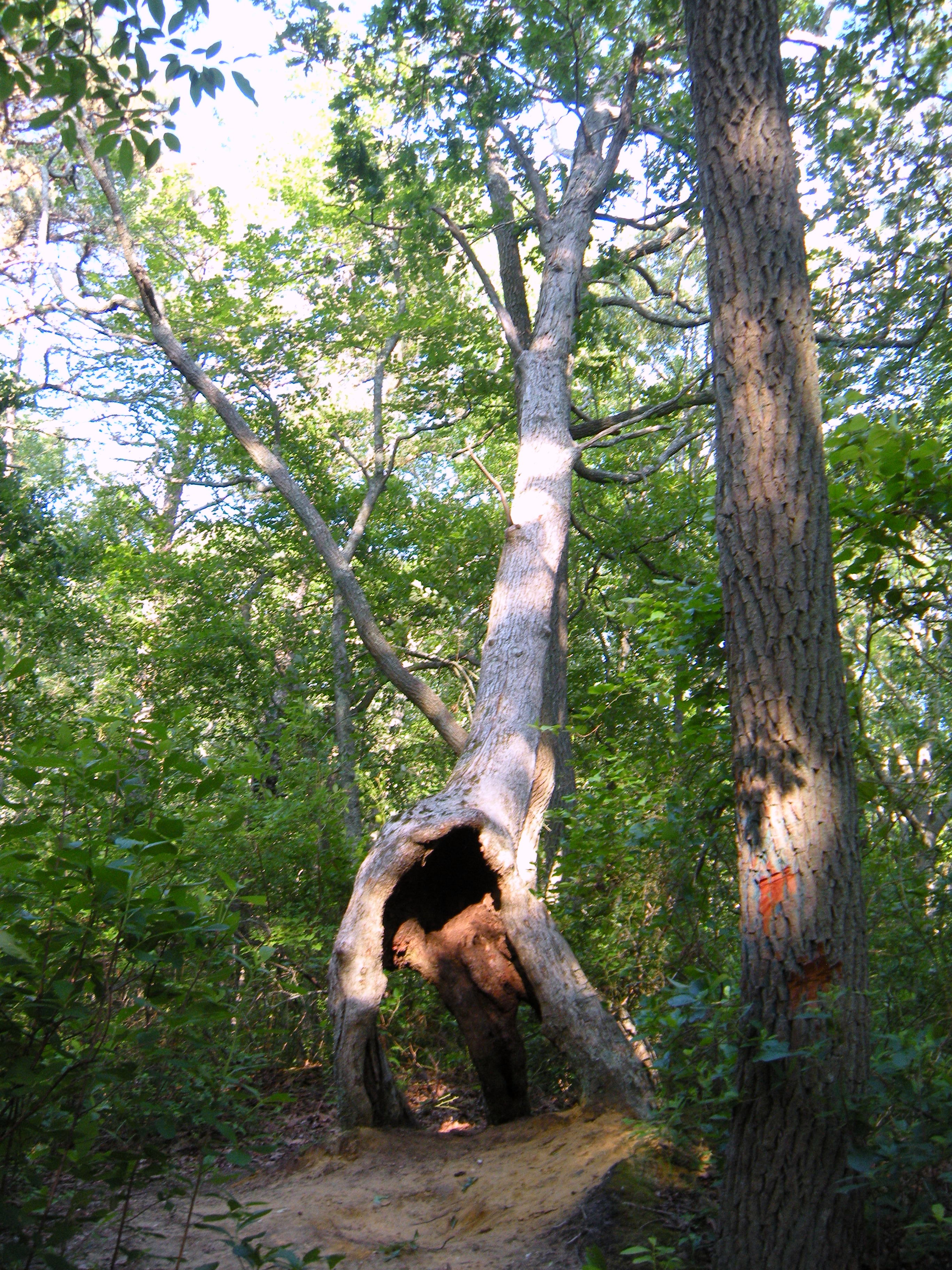 Deformed Tree Stumps, Trees, Wood, Stumps, Roots, HQ Photo