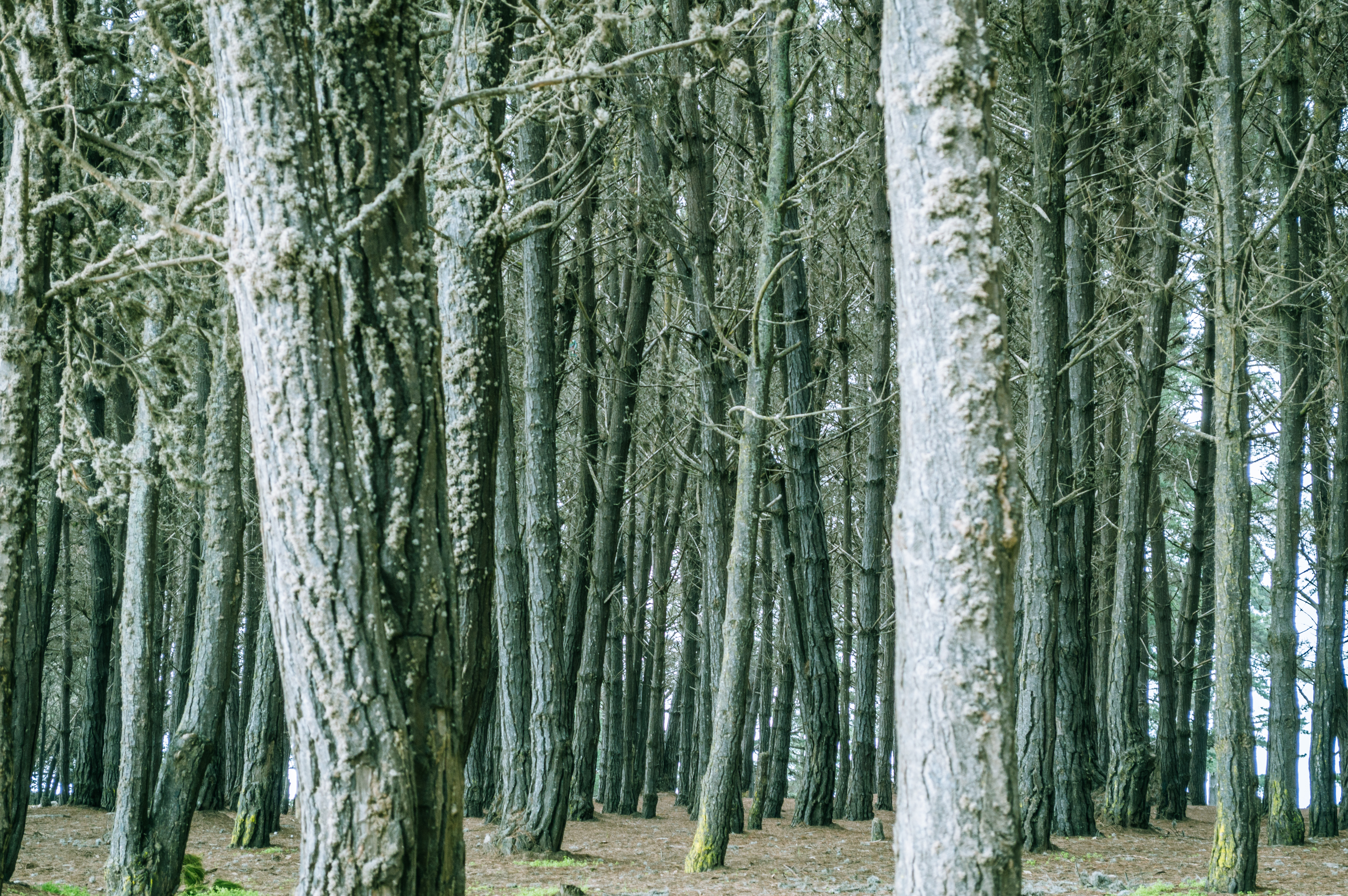 Dense trees in forest photo