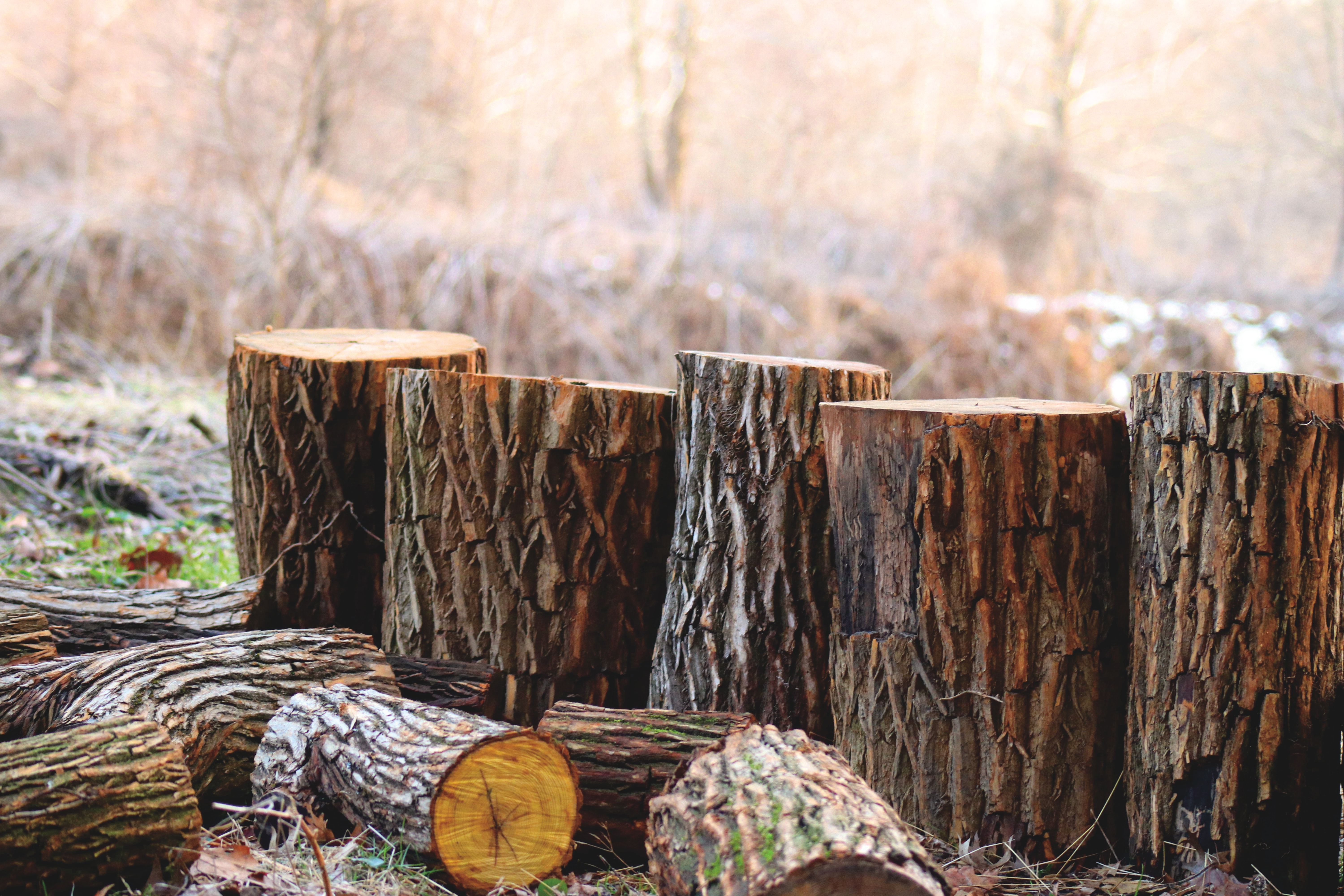 Depth of Field Photography of Brown Tree Logs, Blurred background, Season, Woodpile, Wooden, HQ Photo