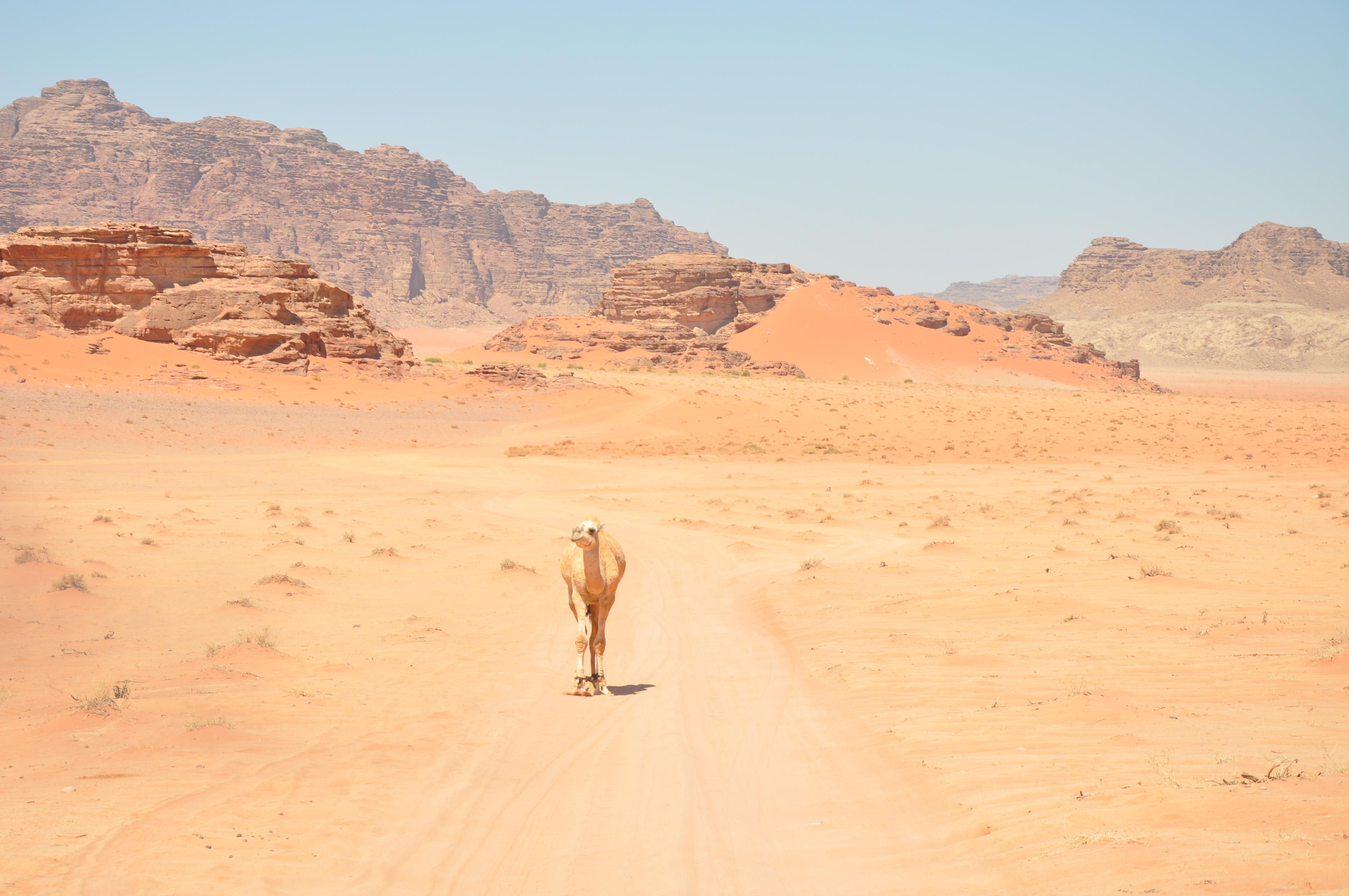Desert landscape photo