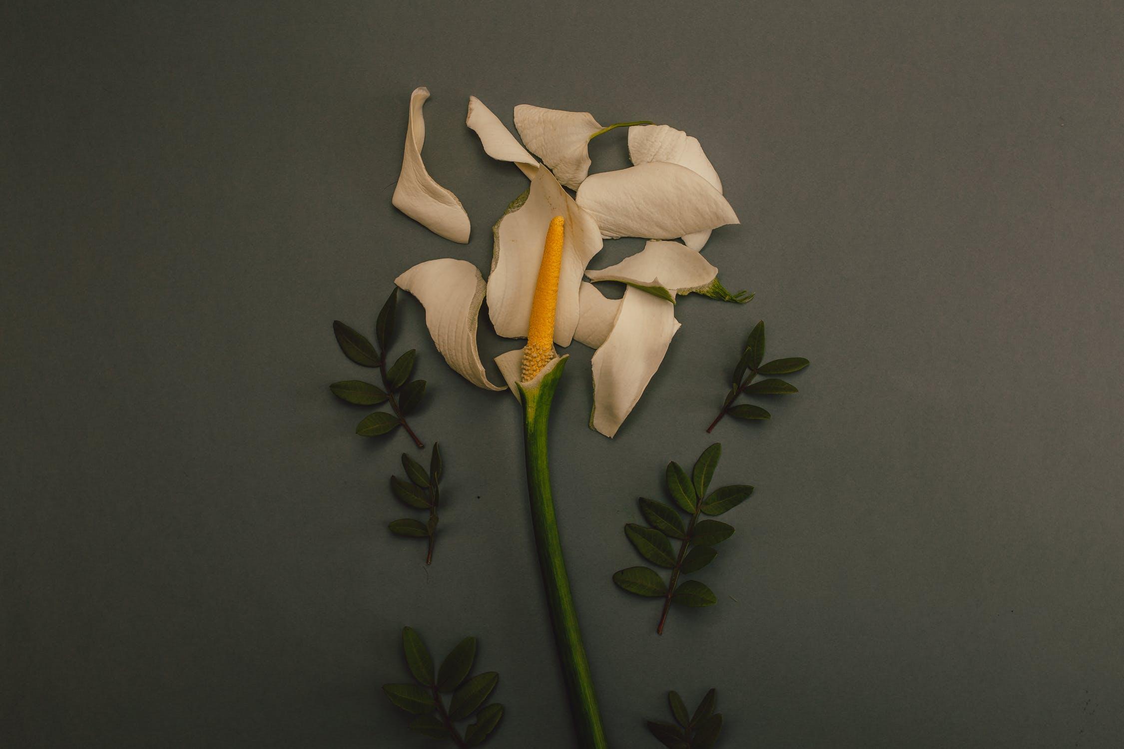 destroyed flower, destroyed flower