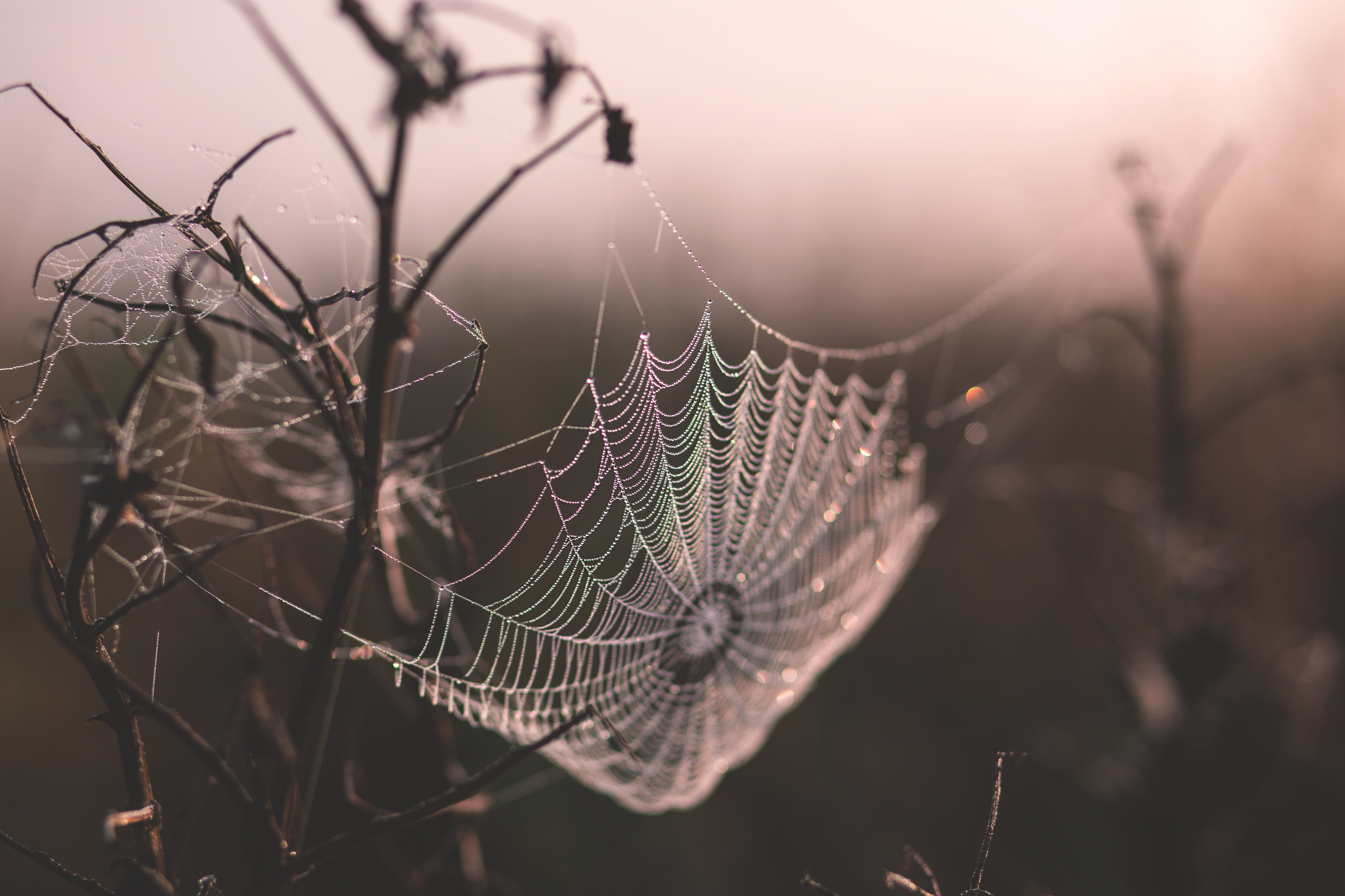 Dew on a spider's web, Backgrounds, Reflection, Web, Water, HQ Photo