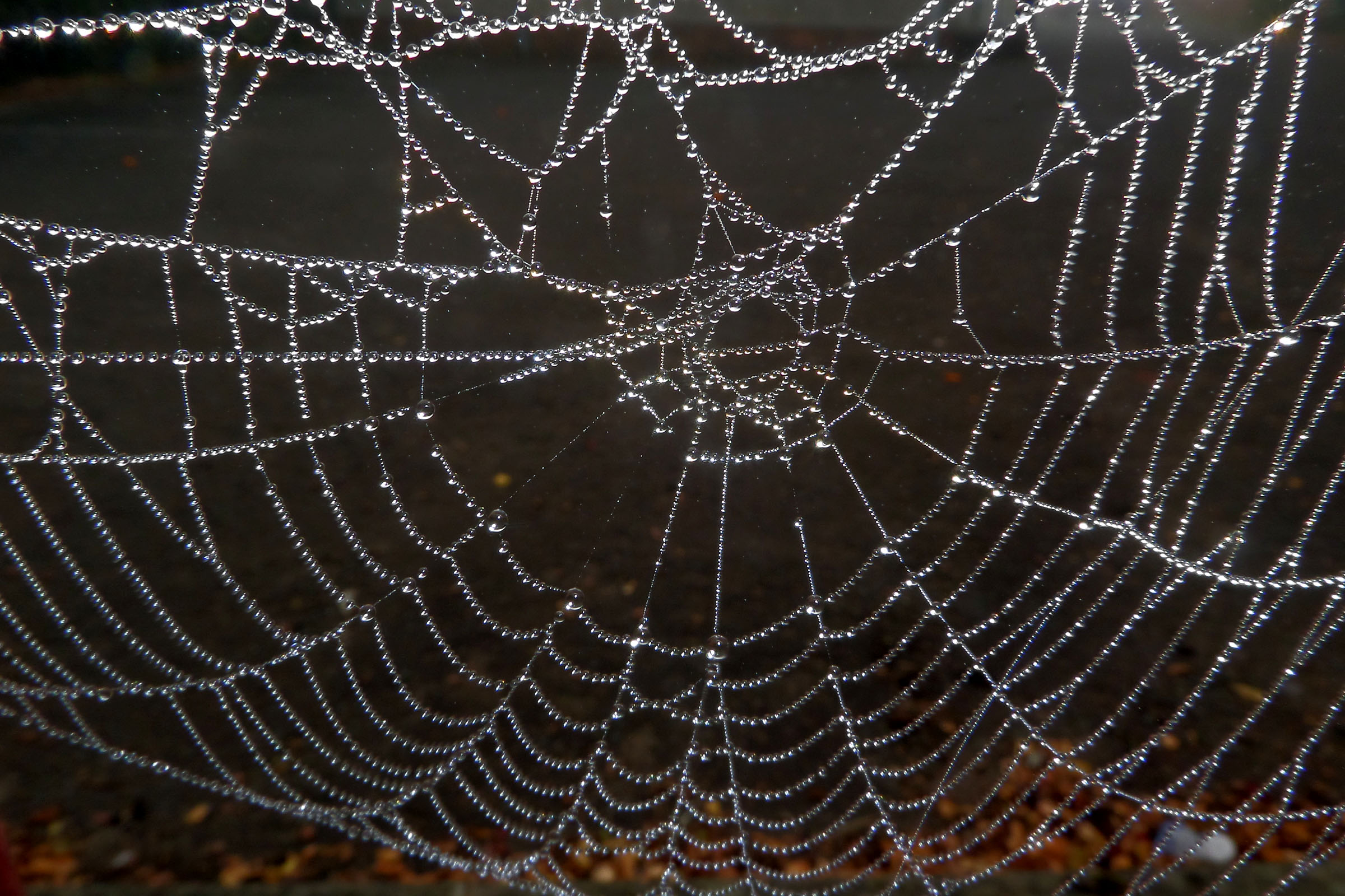 Dew soaked spiders web photo