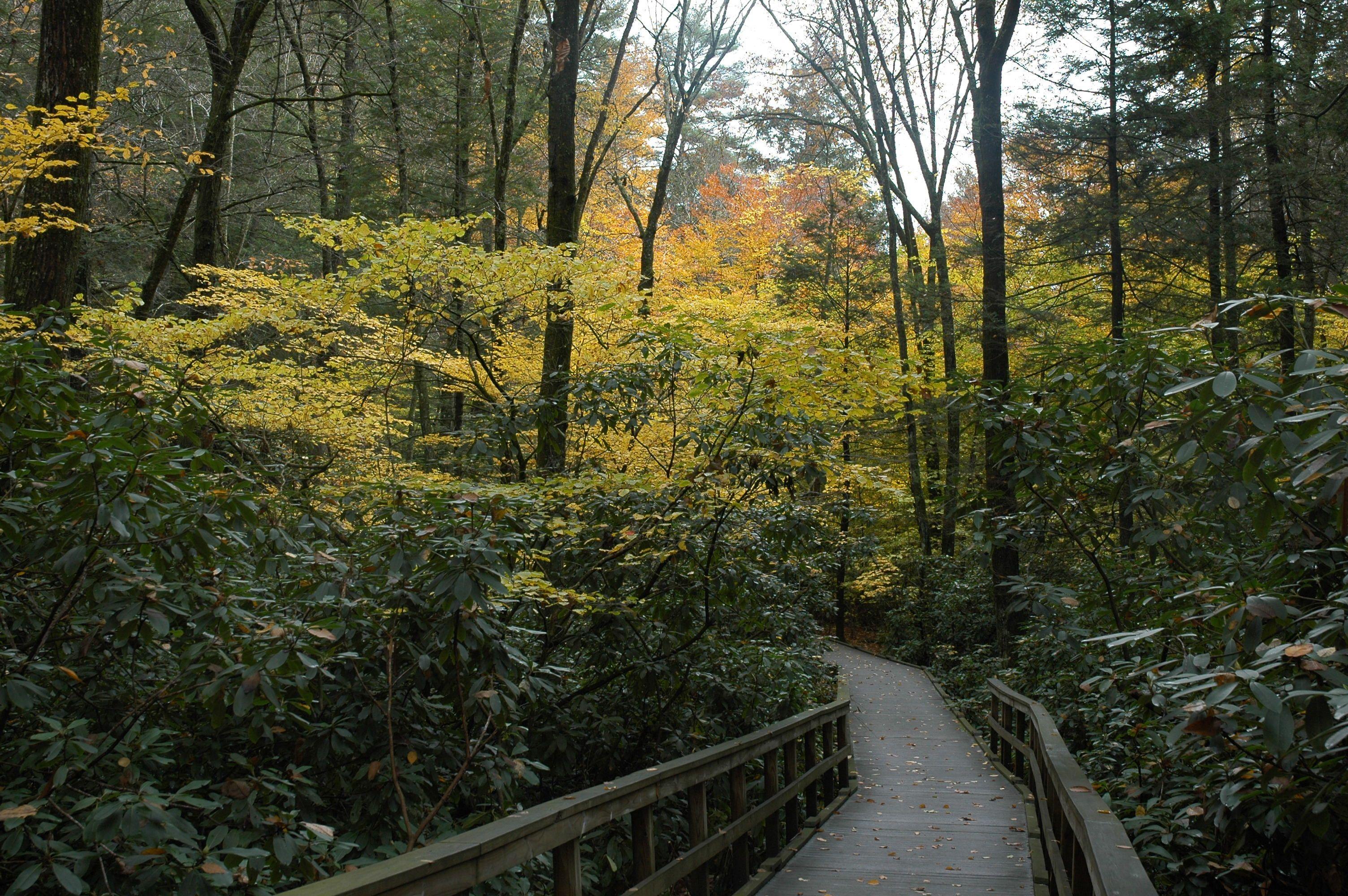 Dingmans Falls Boardwalk, pa | Fall Foliage | Pinterest