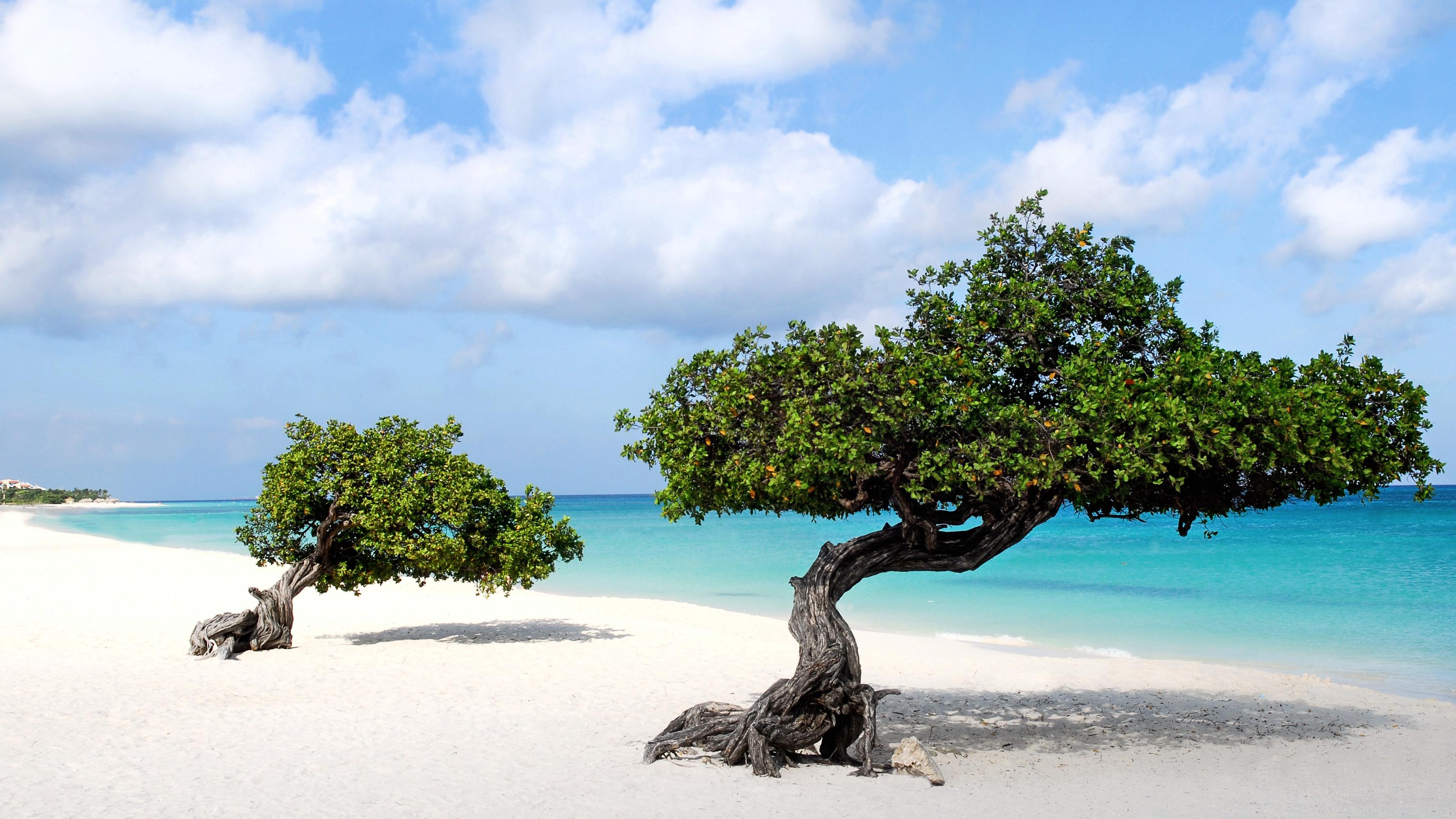 Beautiful wallpaper of Divi trees in Aruba island - Beach Wallpapers