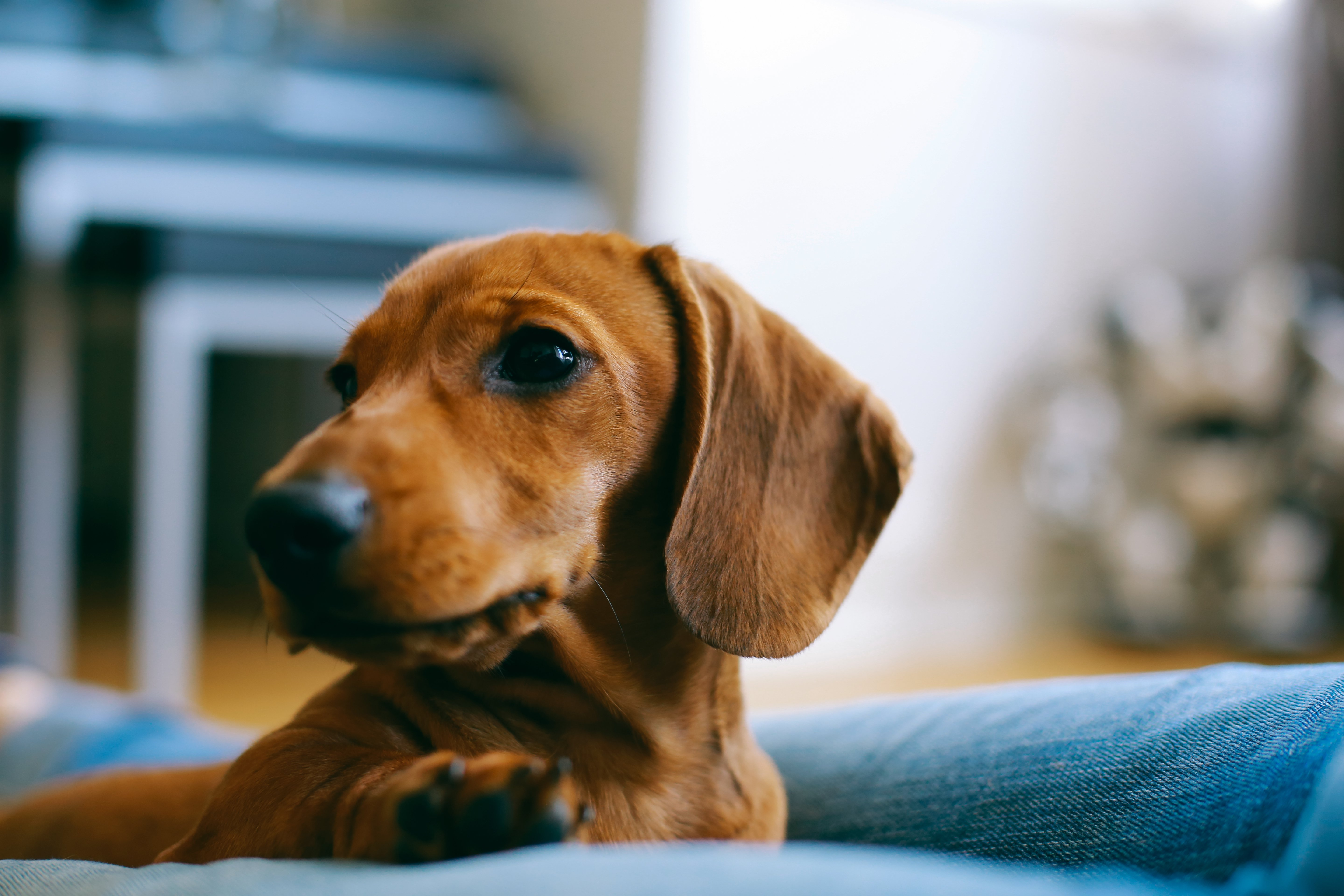 Oklahoma Woman Killed in Attack by Pack of Dachshund Dogs | Time