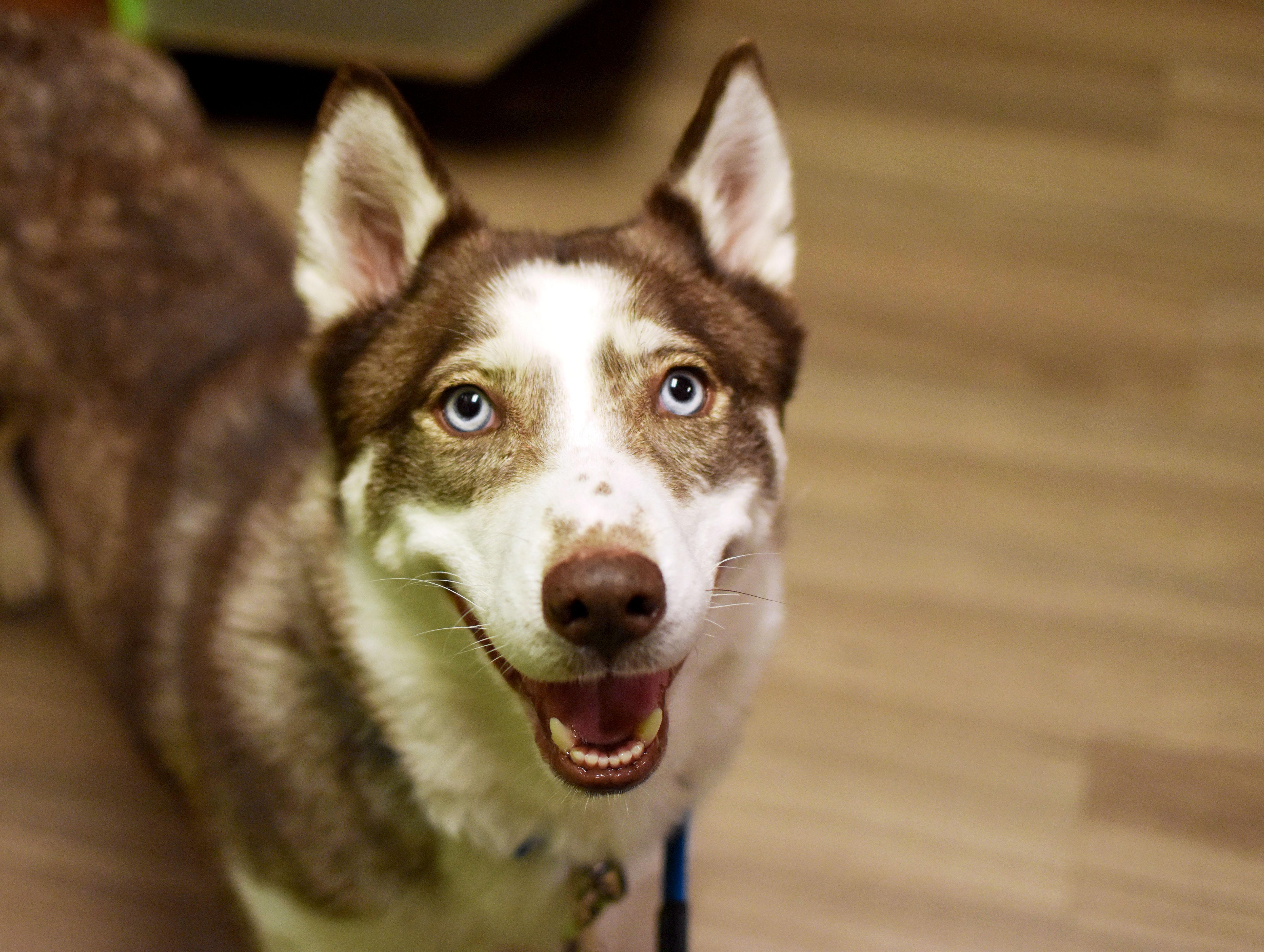 Adopt a Dog - Upper Peninsula Animal Welfare Shelter