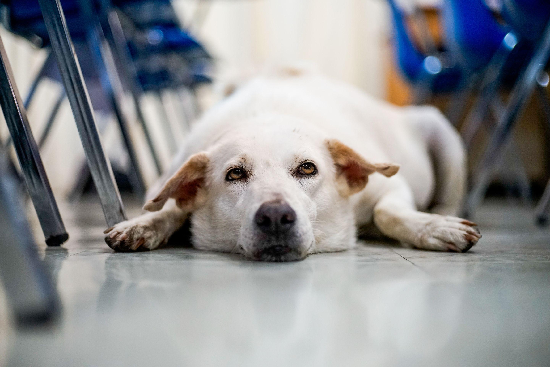 Bringing a Dog to School | Edutopia