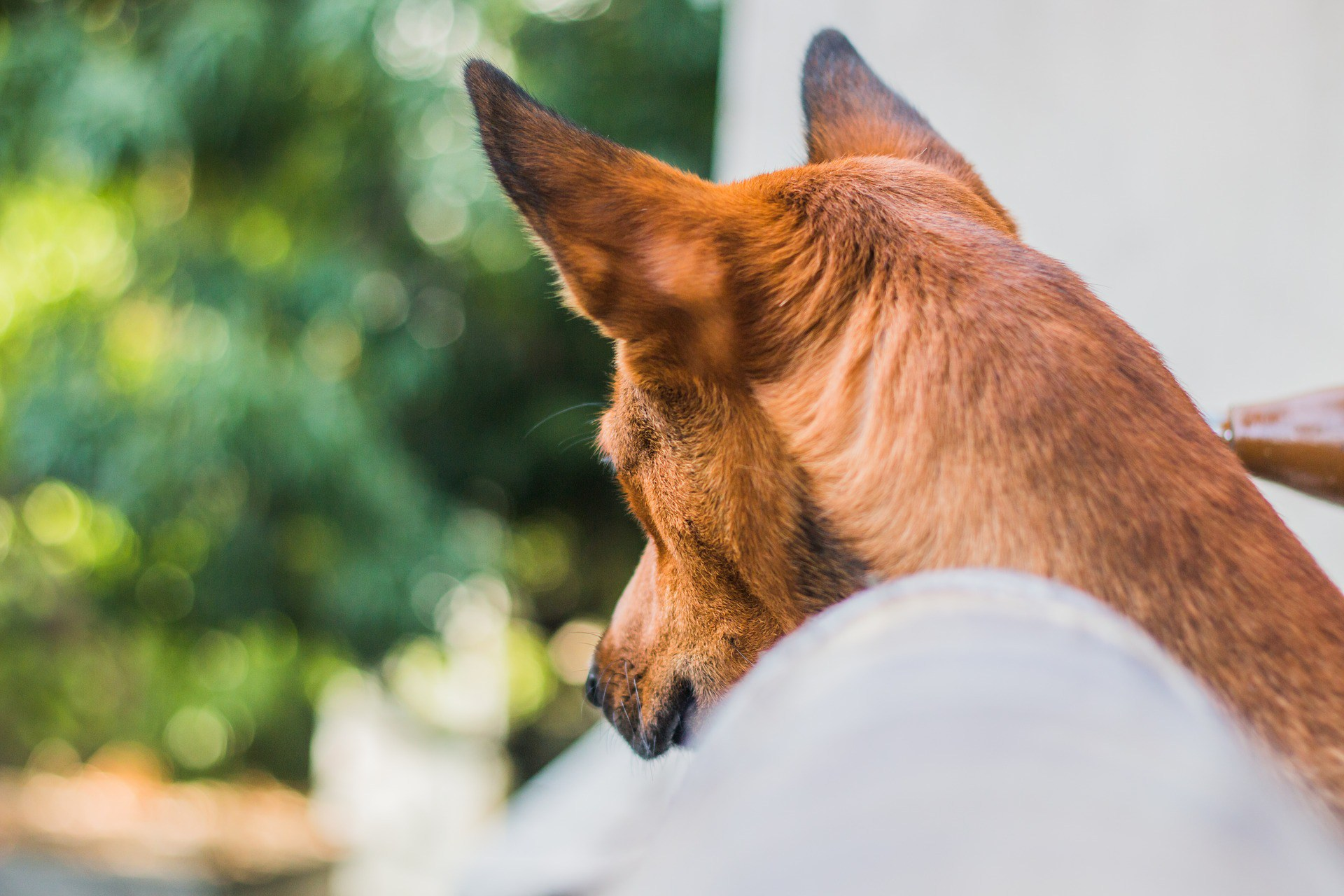 100+ Examples of Service Dog Tasks - Anything Pawsable