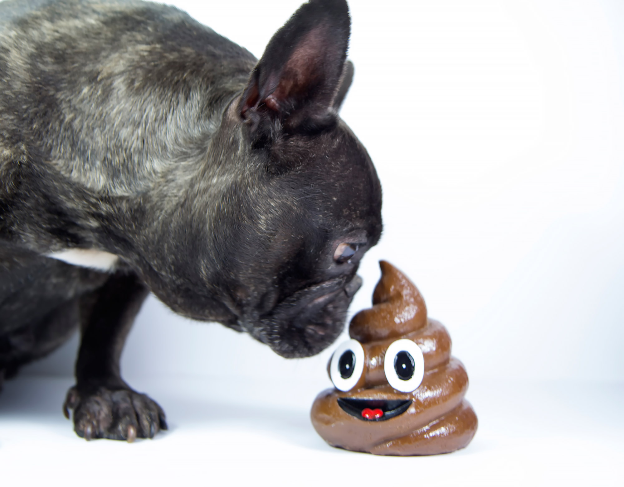 Why Dogs Eat Poop According to Science | PEOPLE.com