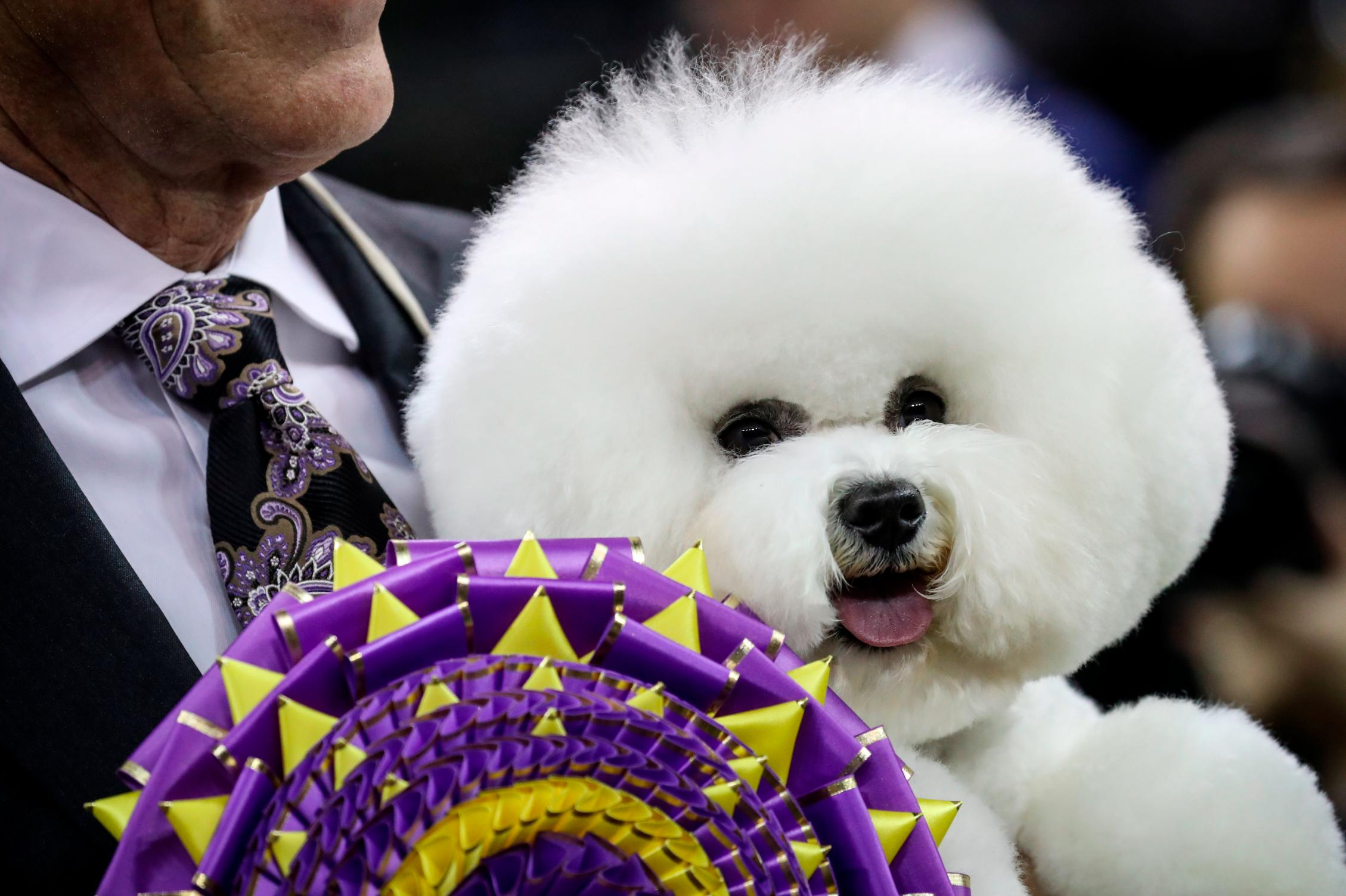 Dogs descend upon Manhattan for Dog Show - CNN Video