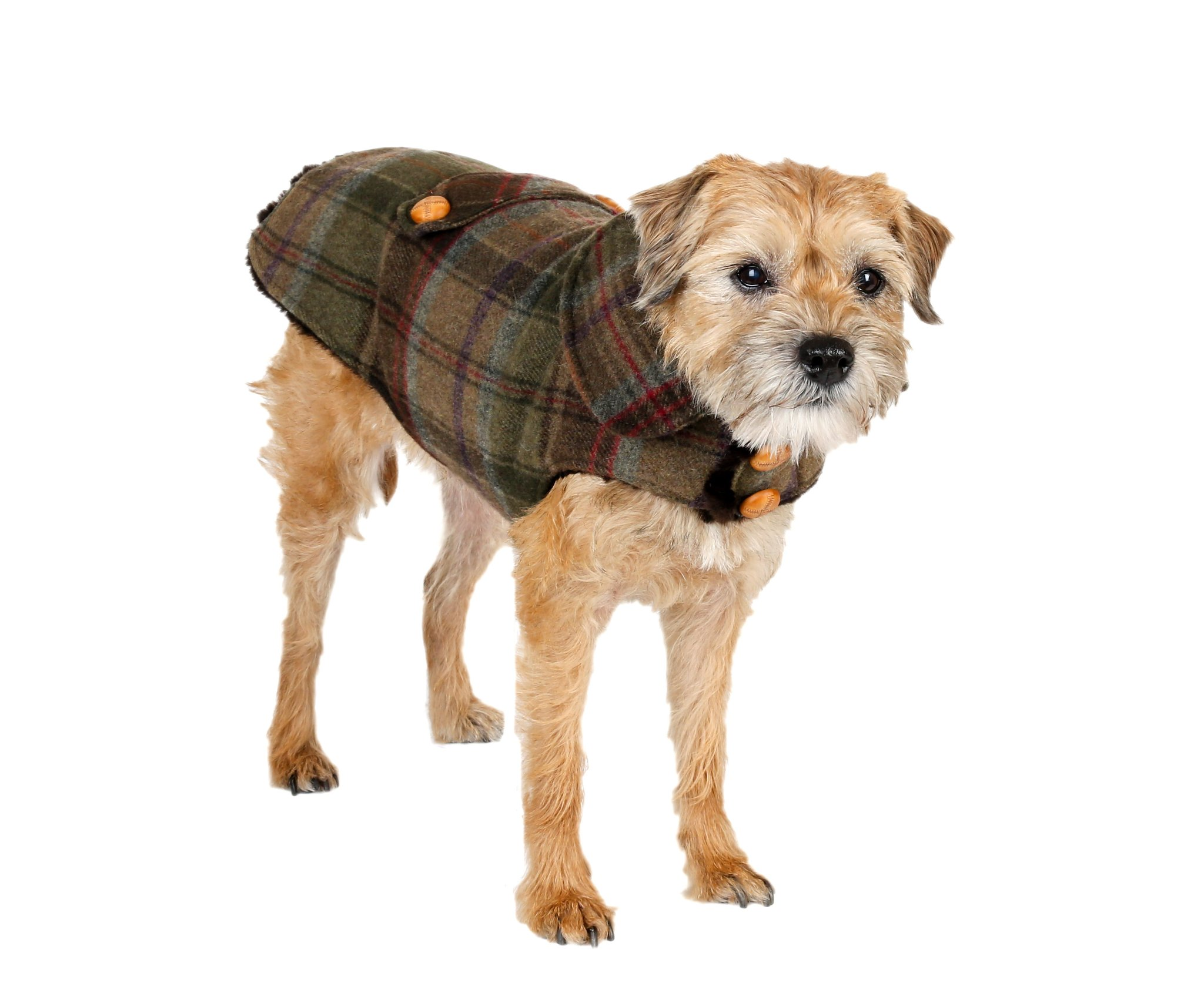 Dog Coats: Luxury, Trendy Boutique | Canine Styles - New York, NY