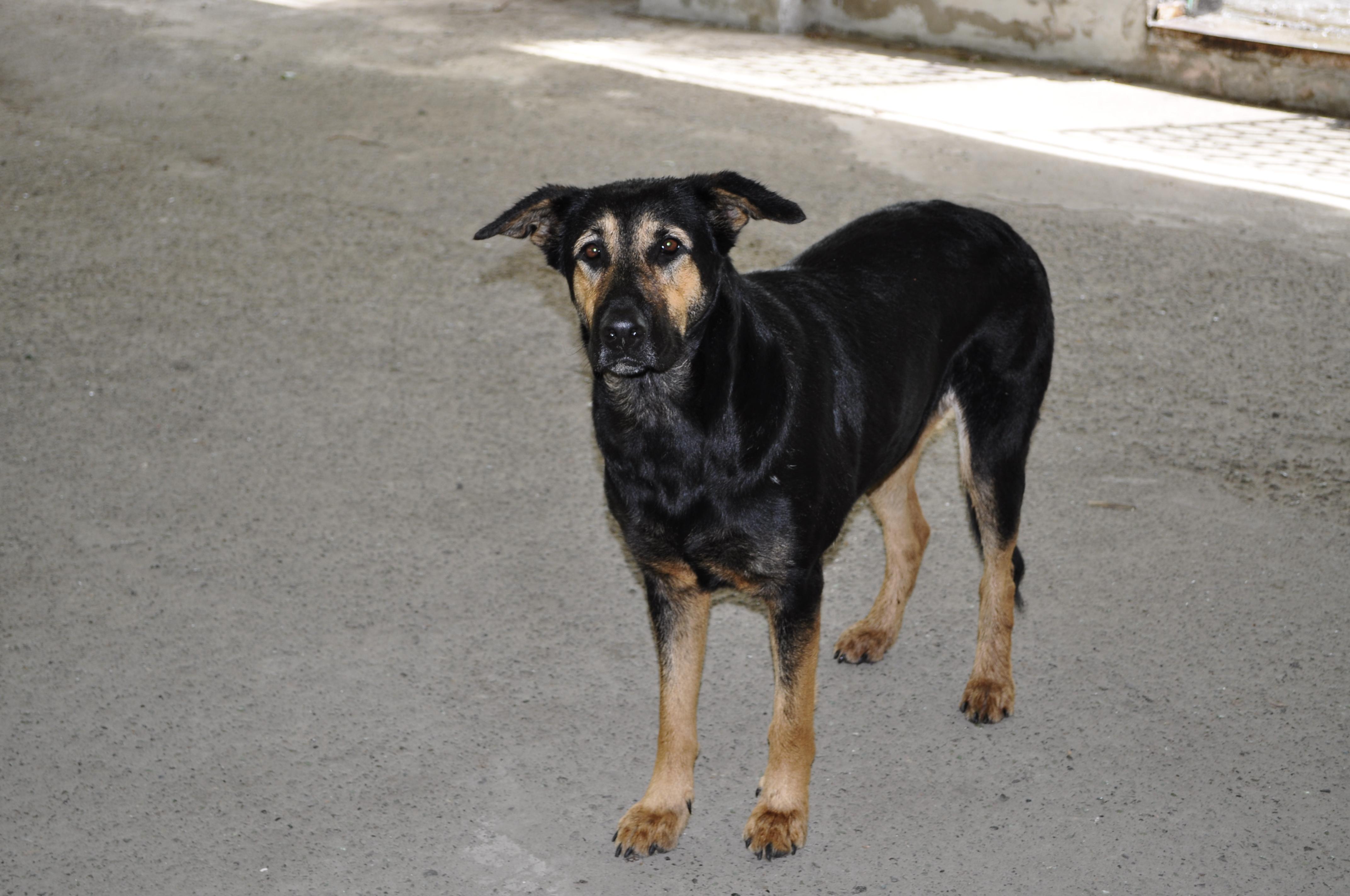 Dog, Animal, Black, K9, Pet, HQ Photo