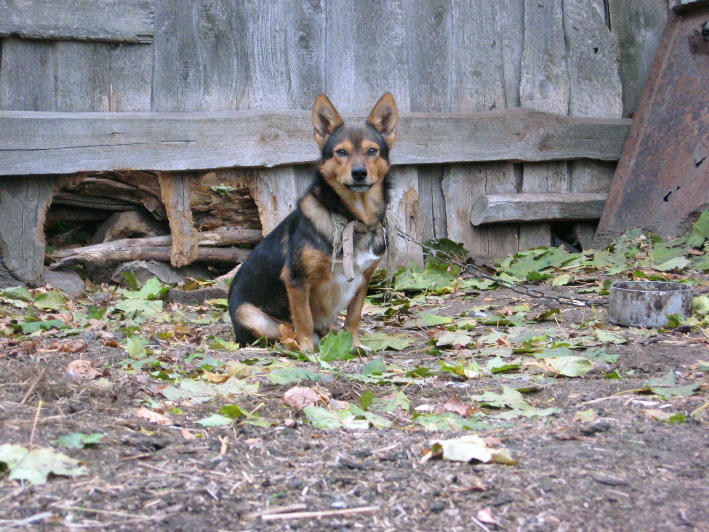 Dog, Animal, K9, Mammal, Pet, HQ Photo