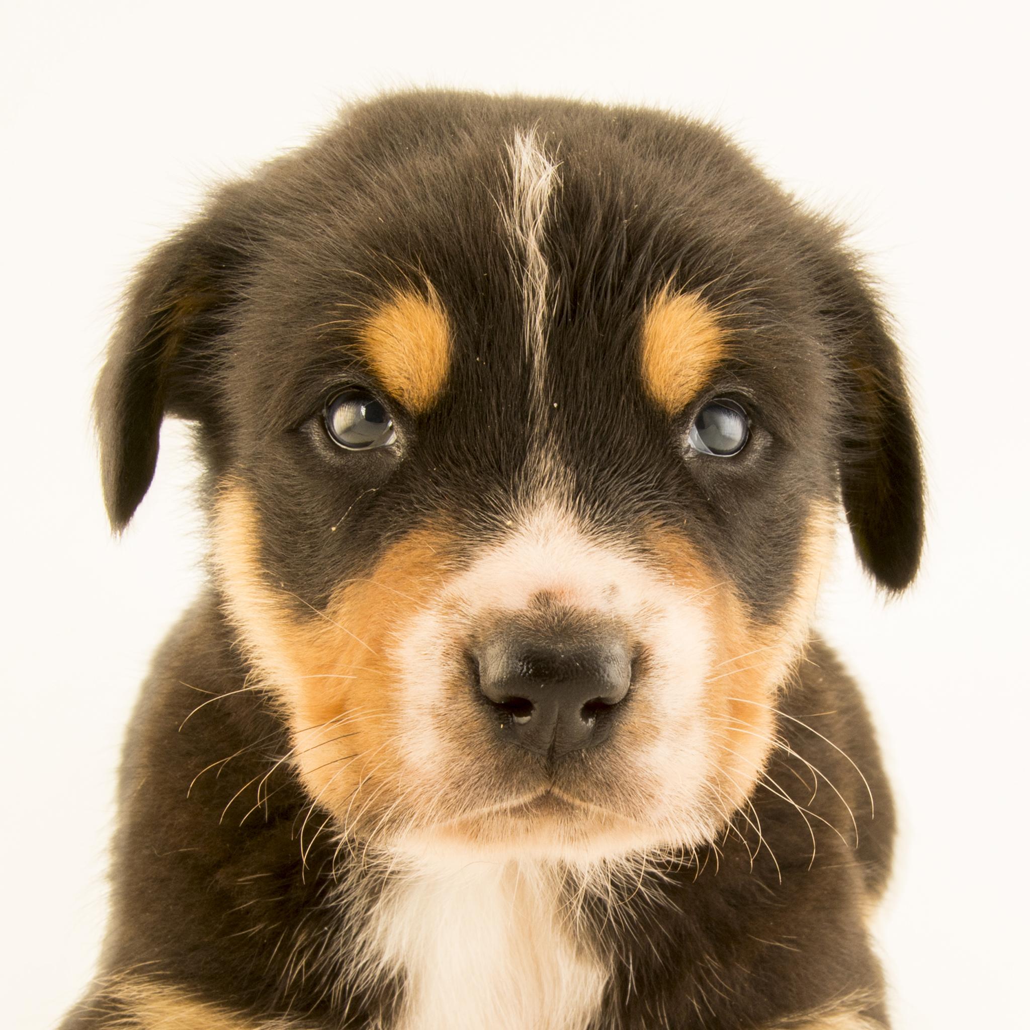 Dog | National Geographic