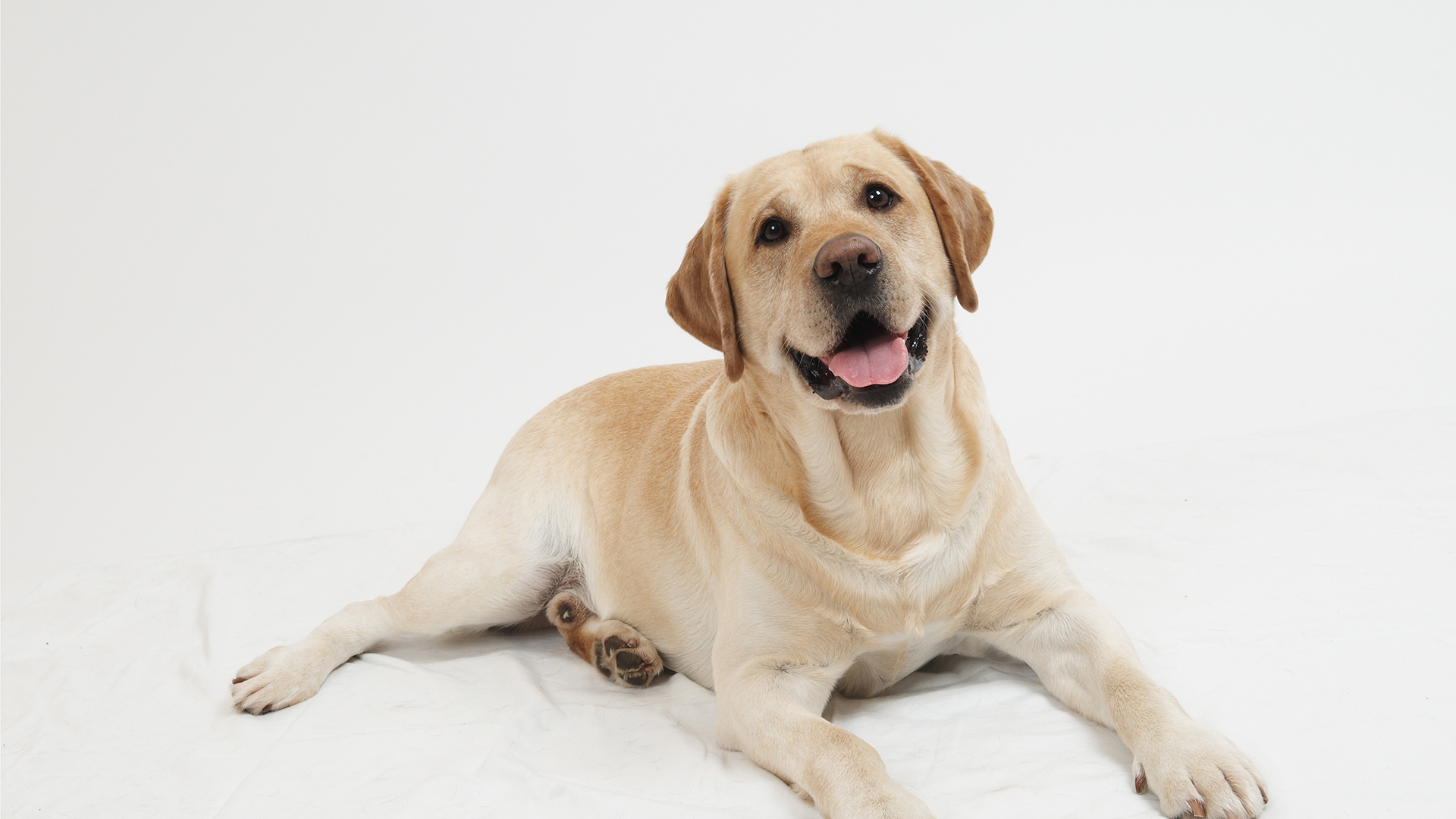 How To Care For A Pregnant Dog: An Insight - Ejournalz