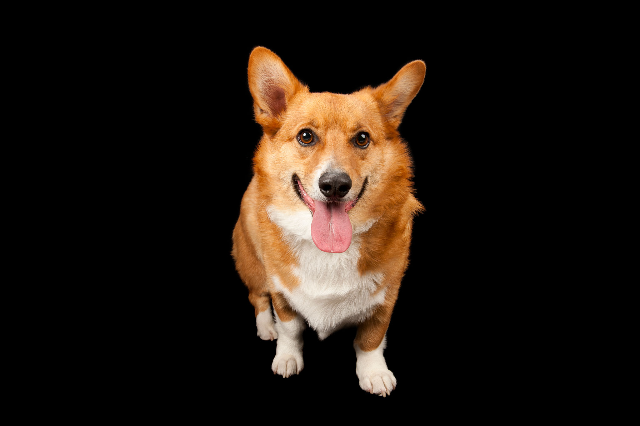 Learning How Dogs Recognize Emotions Could Help Us Understand Canine ...