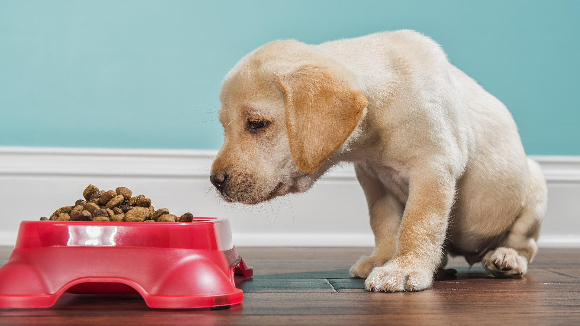 Kibbles 'n Bits, other dog food brands recalled after euthanasia ...